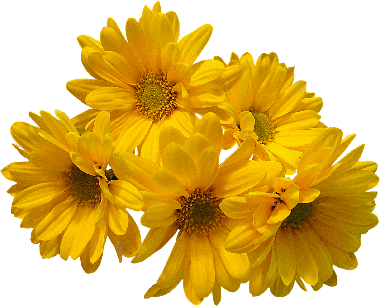 Free photo yellow flowers wood yellow flowers free download download yellow flowers bouquet transparent image hq png image mightylinksfo