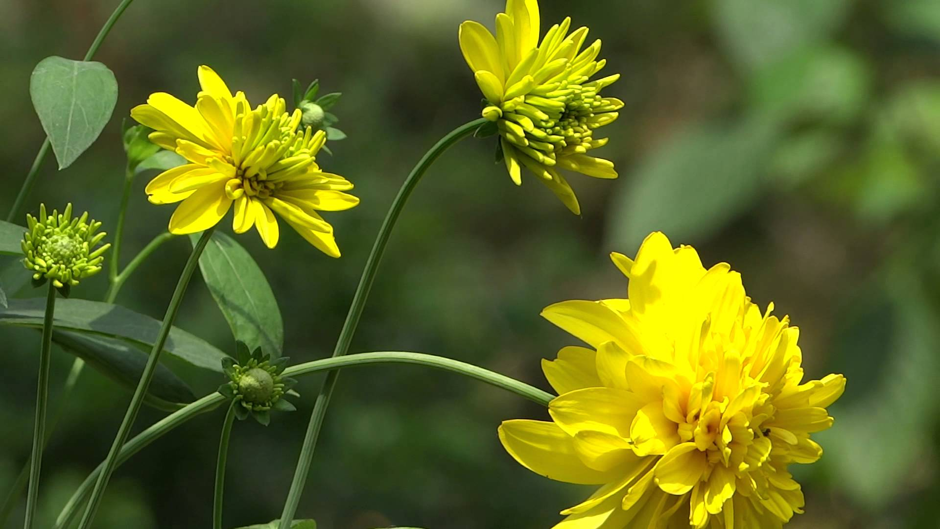 Free Photo Yellow Flowers Park Outdoors Plant Free Download