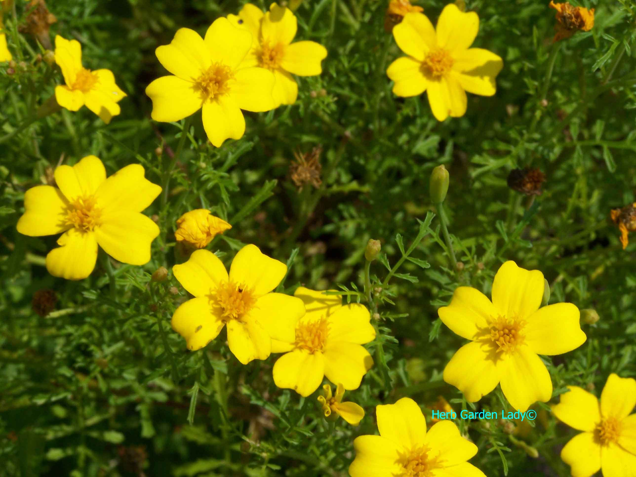 Free Photo Yellow Flowers Spring Seasonal Season Free
