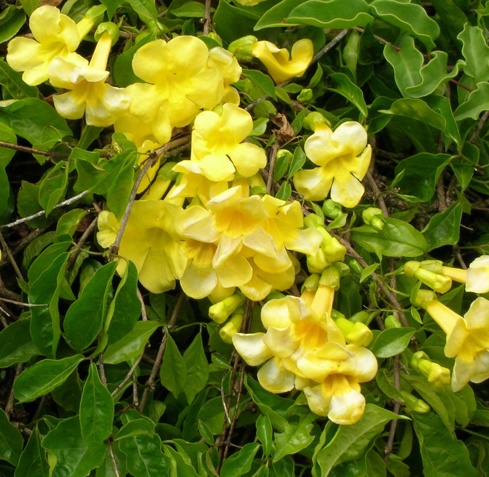 Free photo yellow flowers redrose redandwhiteflowe purple yellow flowers mightylinksfo