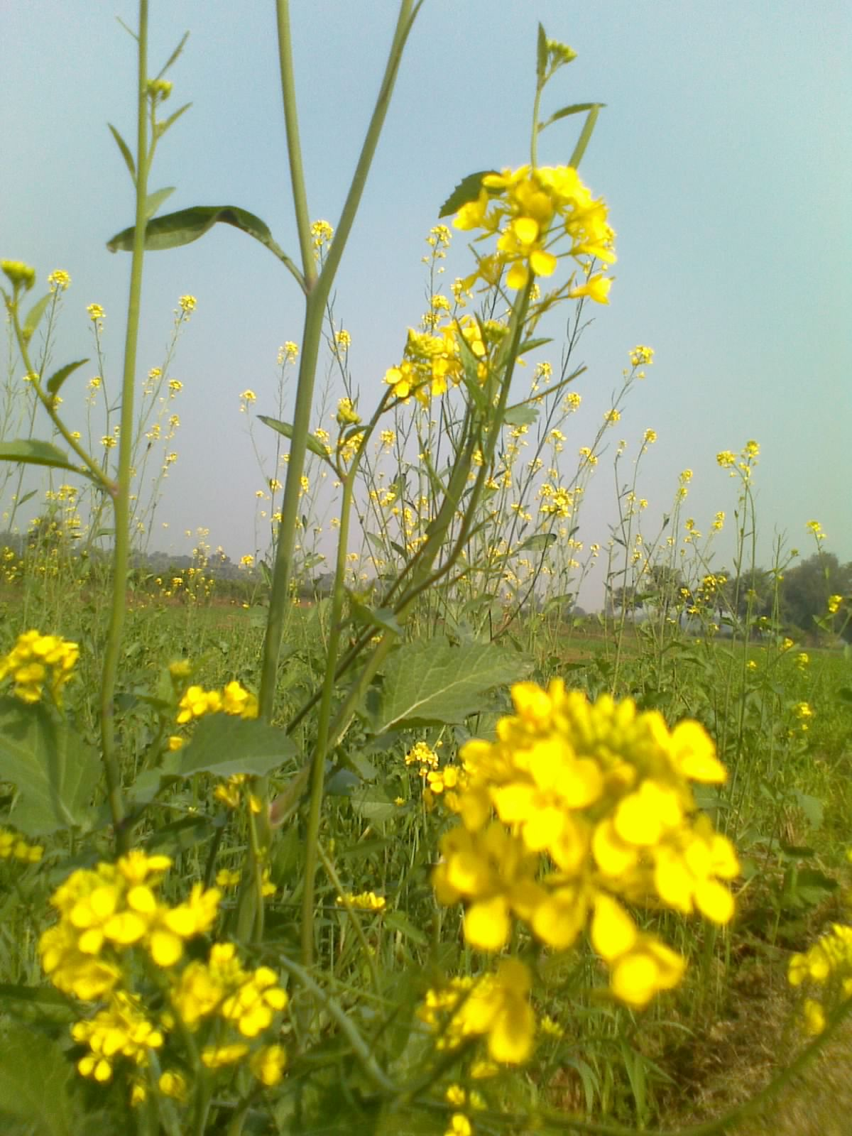 Free Photo Yellow Flowers Spring Yellow Nature Free Download