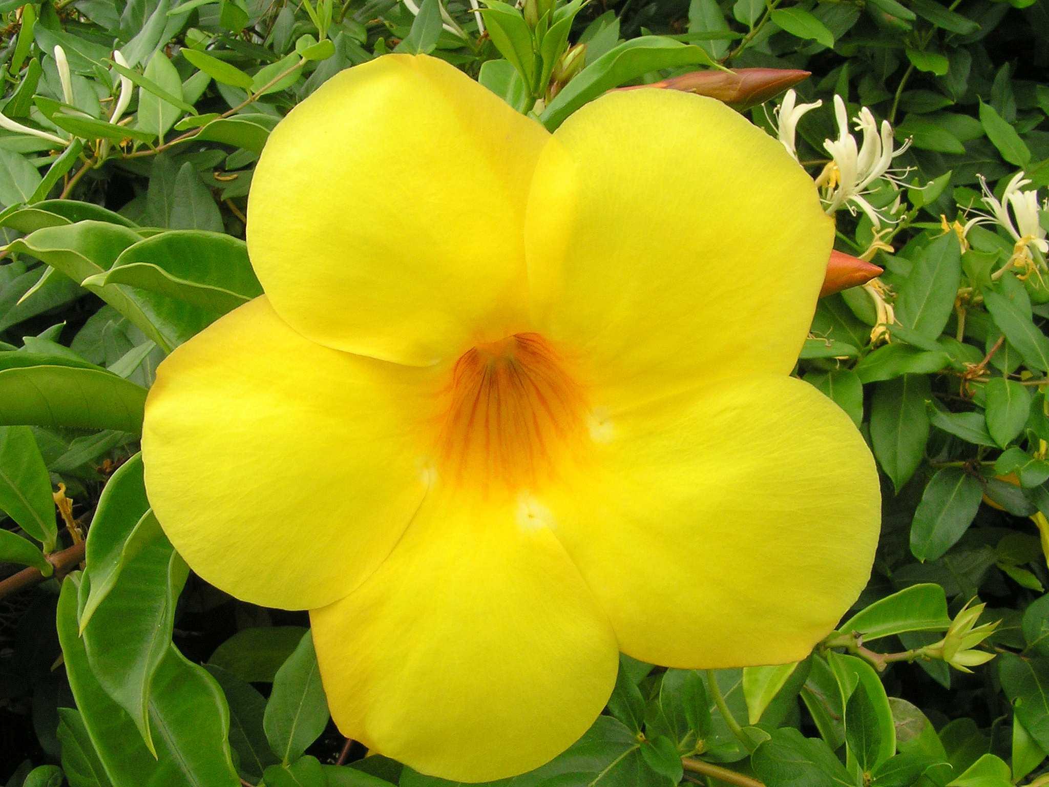 Free photo yellow flowers plant yellow orange free download yellow flowers mightylinksfo