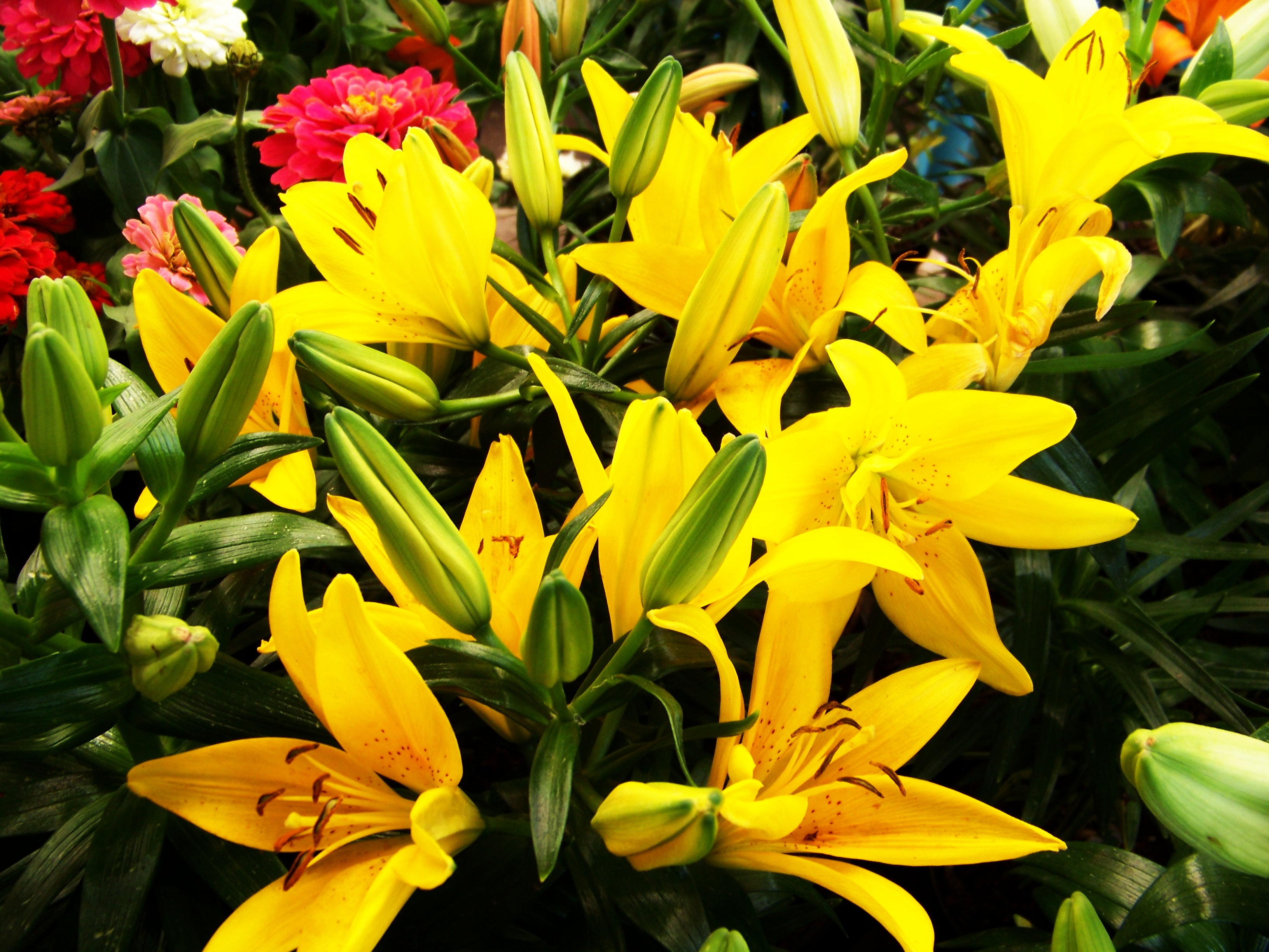 Yellow flowers, Agriculture, Season, Natural, Nature, HQ Photo