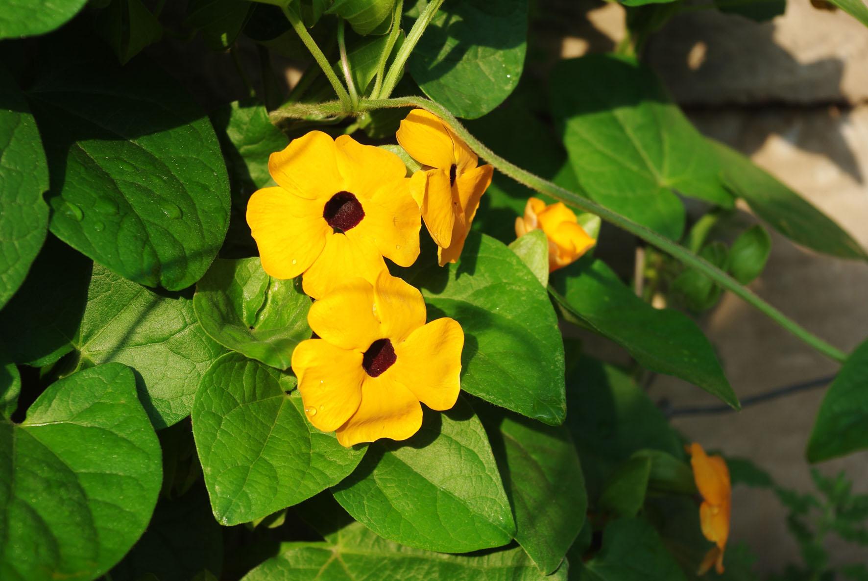 Free Photo Yellow Flowers Plant Pretty Vivid Free Download