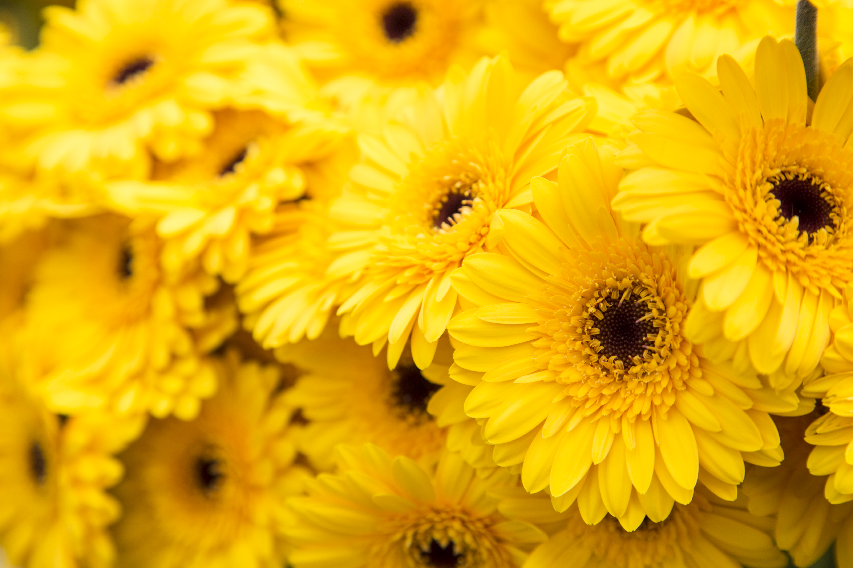 Yellow flowers: HortiBiz