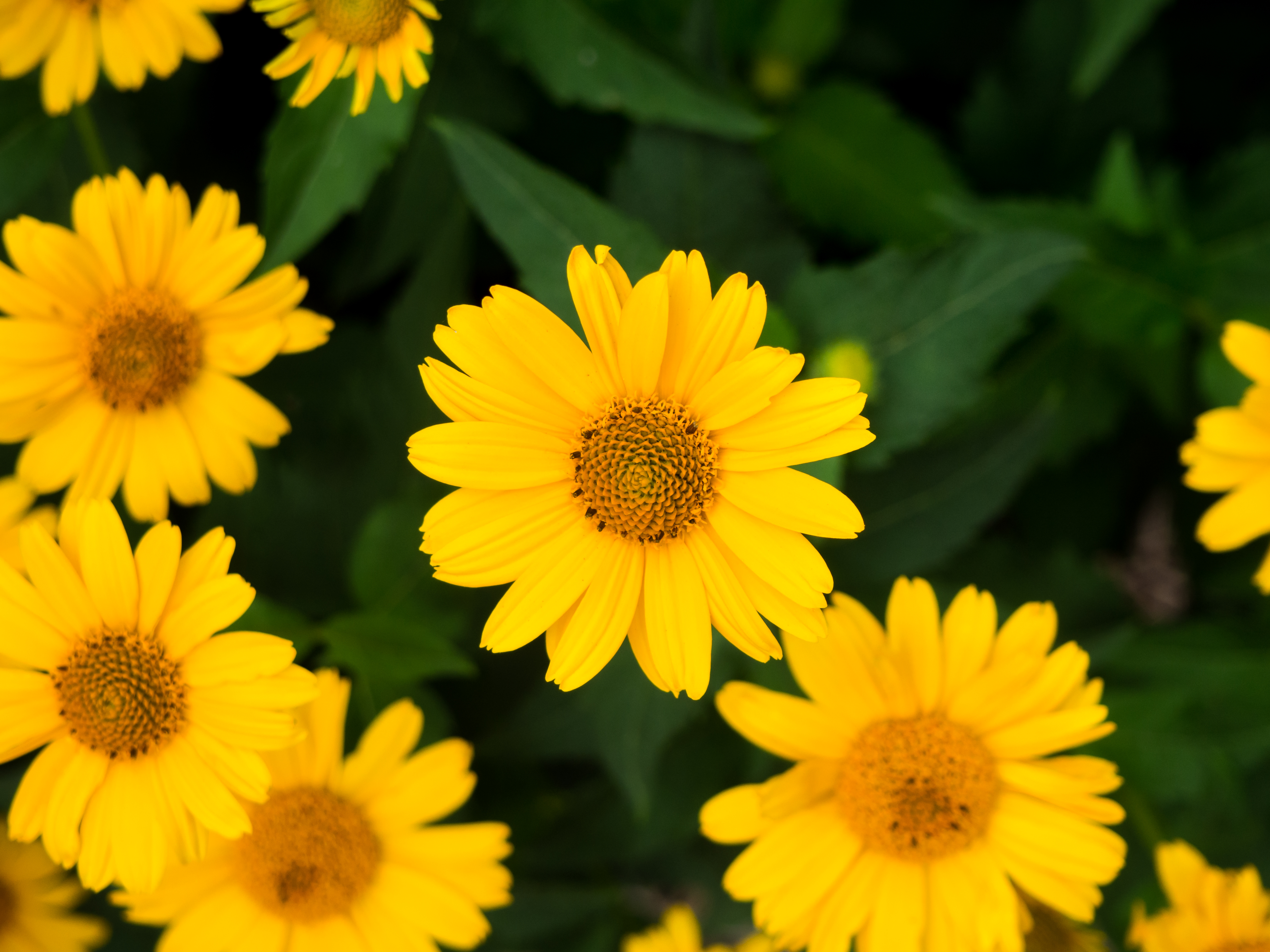 Yellow Flowers and Leaves – MMT