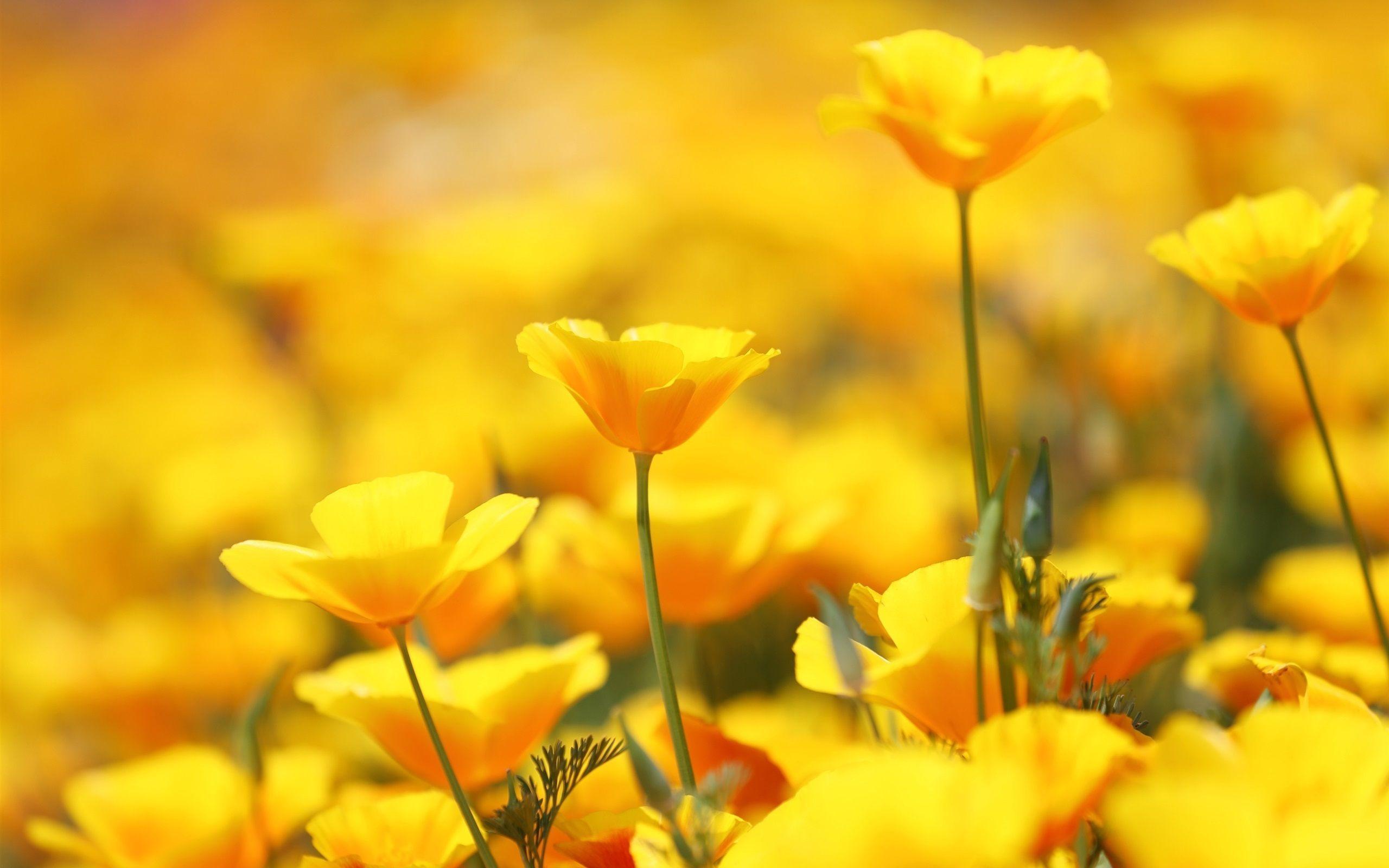 Free photo beautiful yellow flower yellow gardening beautiful beautiful yellow flower izmirmasajfo