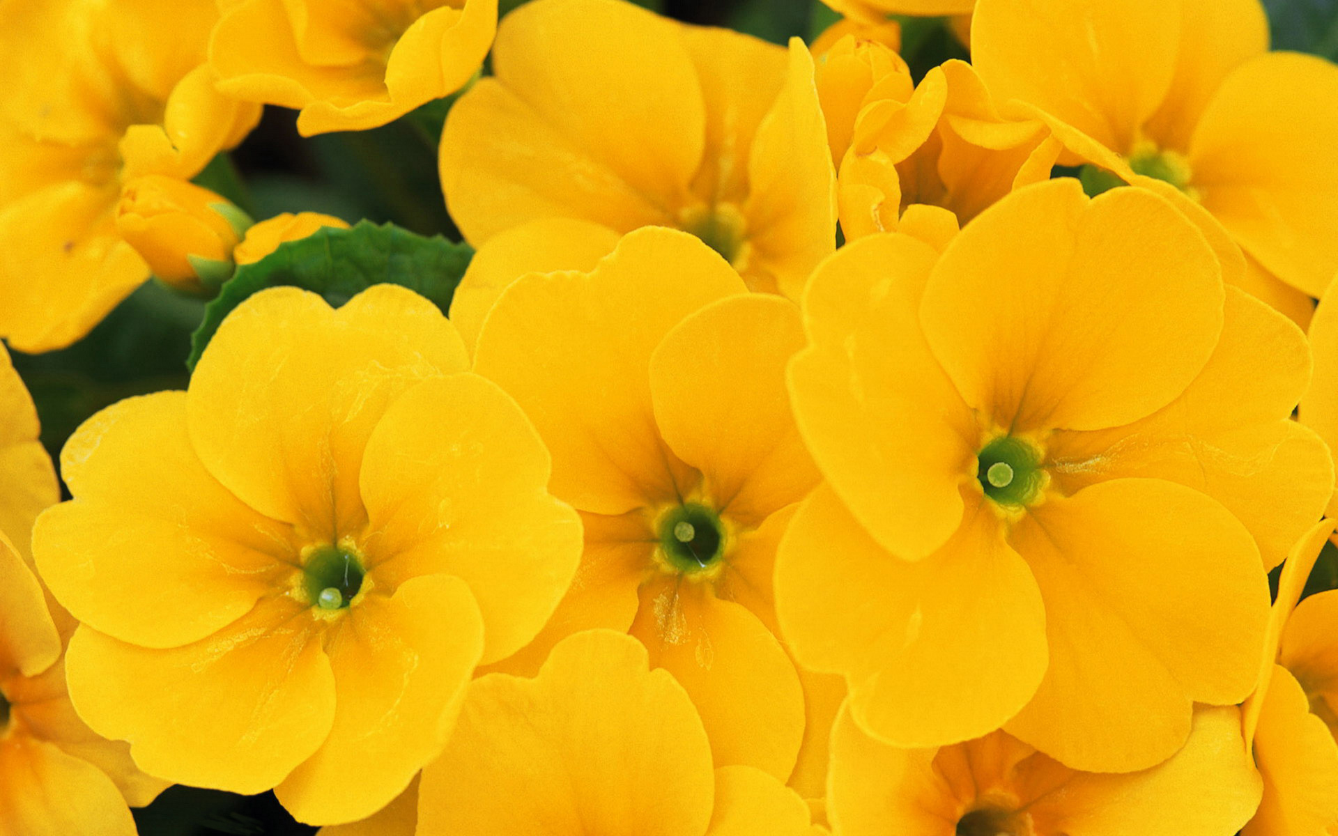 Free Photo Yellow Flowers Macro Yellow Plants Free Download