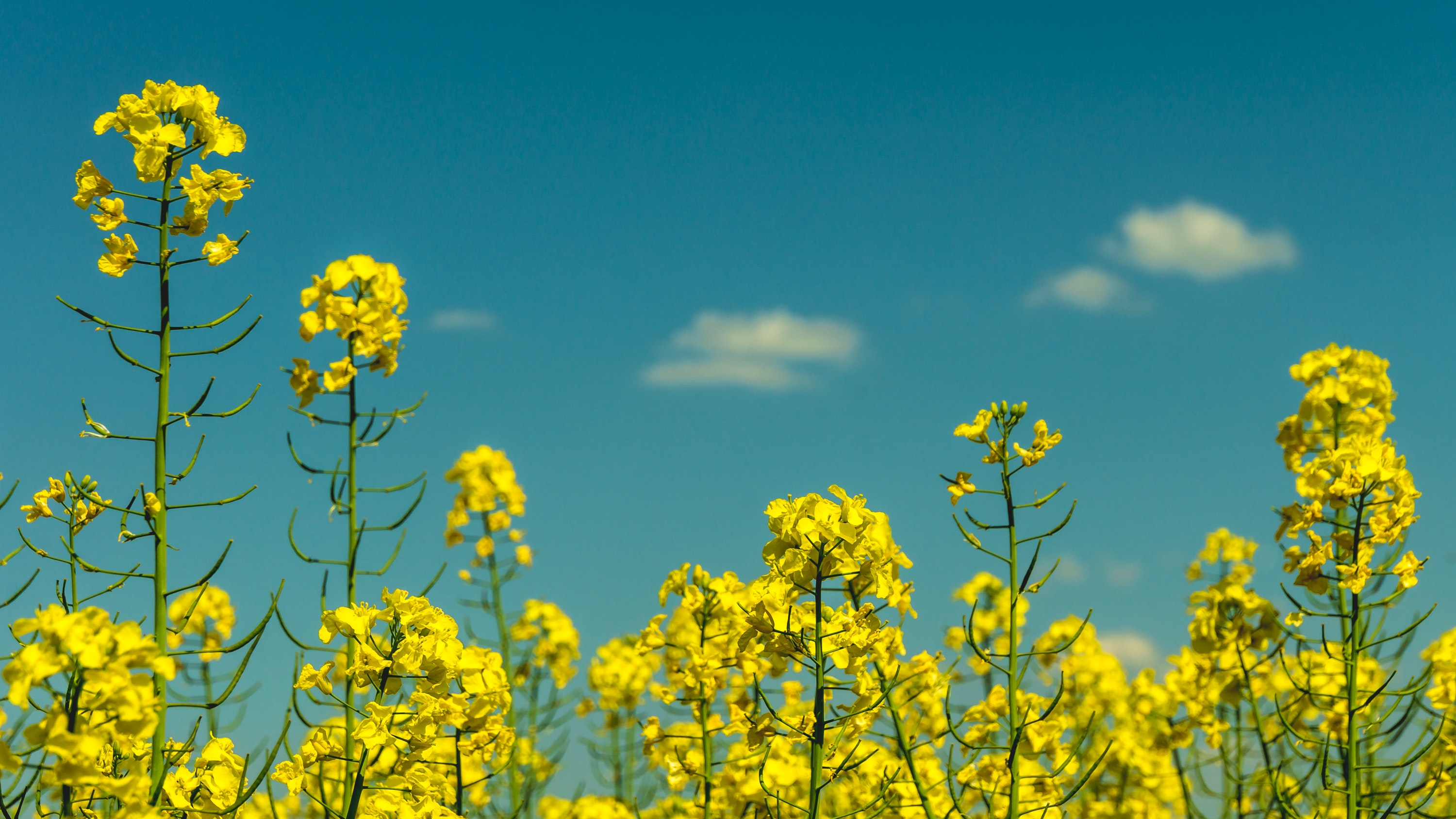 Yellow flowers under partly cloudy skies during daytime photo