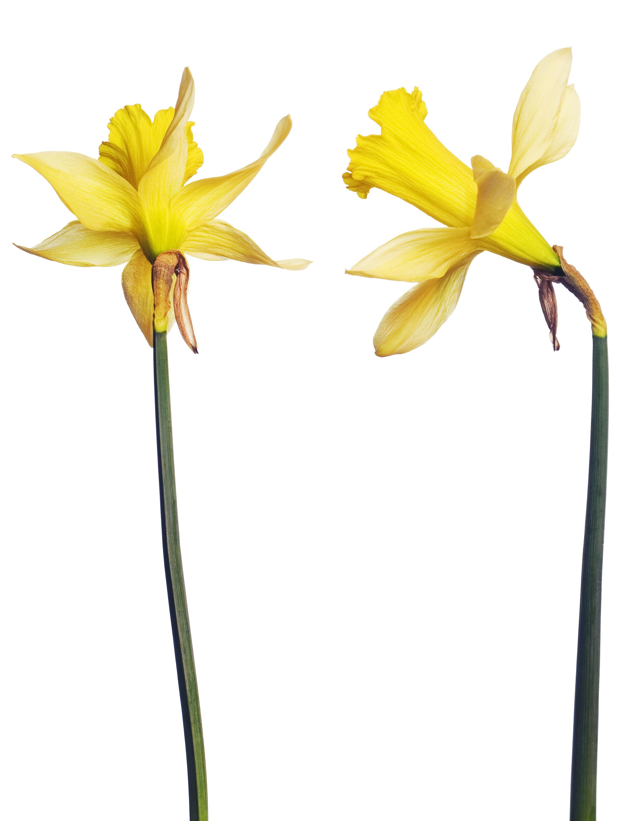 Yellow Flowers, Closeup, Detail, Flora, Floral, HQ Photo