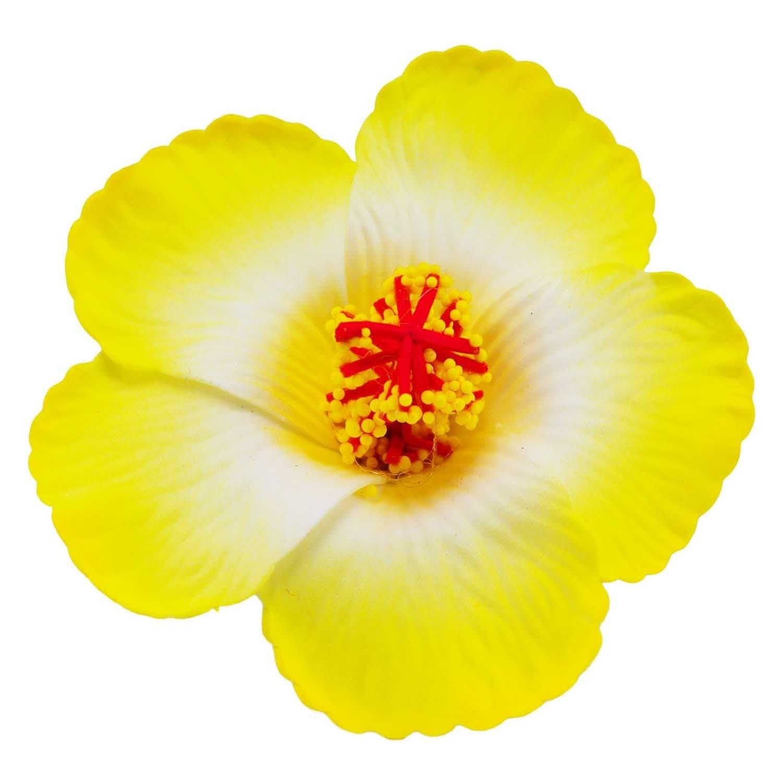 Free Photo Yellow Hibiscus Flower Summer Yellow Hibiscus Free