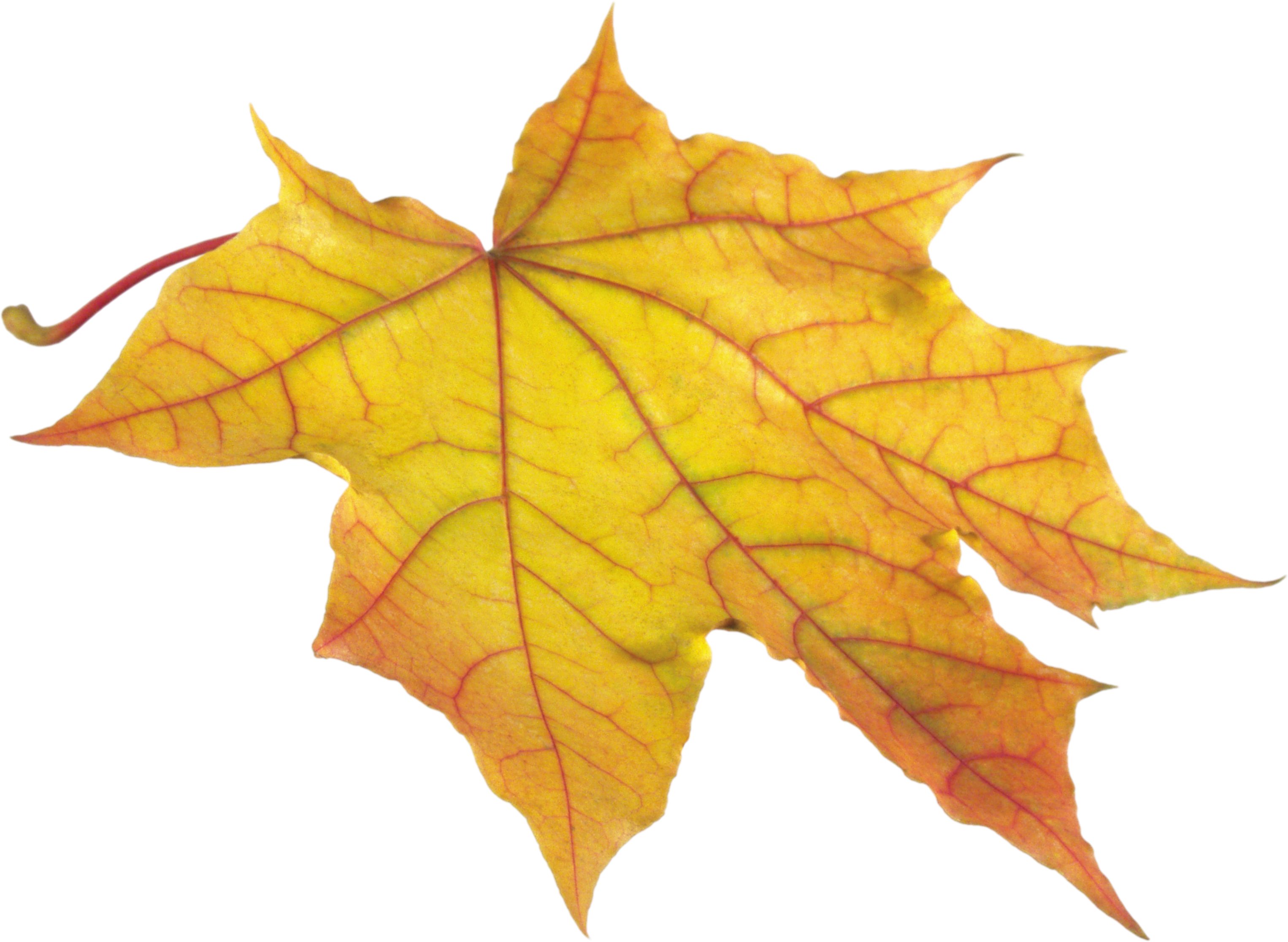Yellow Leaf PNG Image - PurePNG | Free transparent CC0 PNG Image Library
