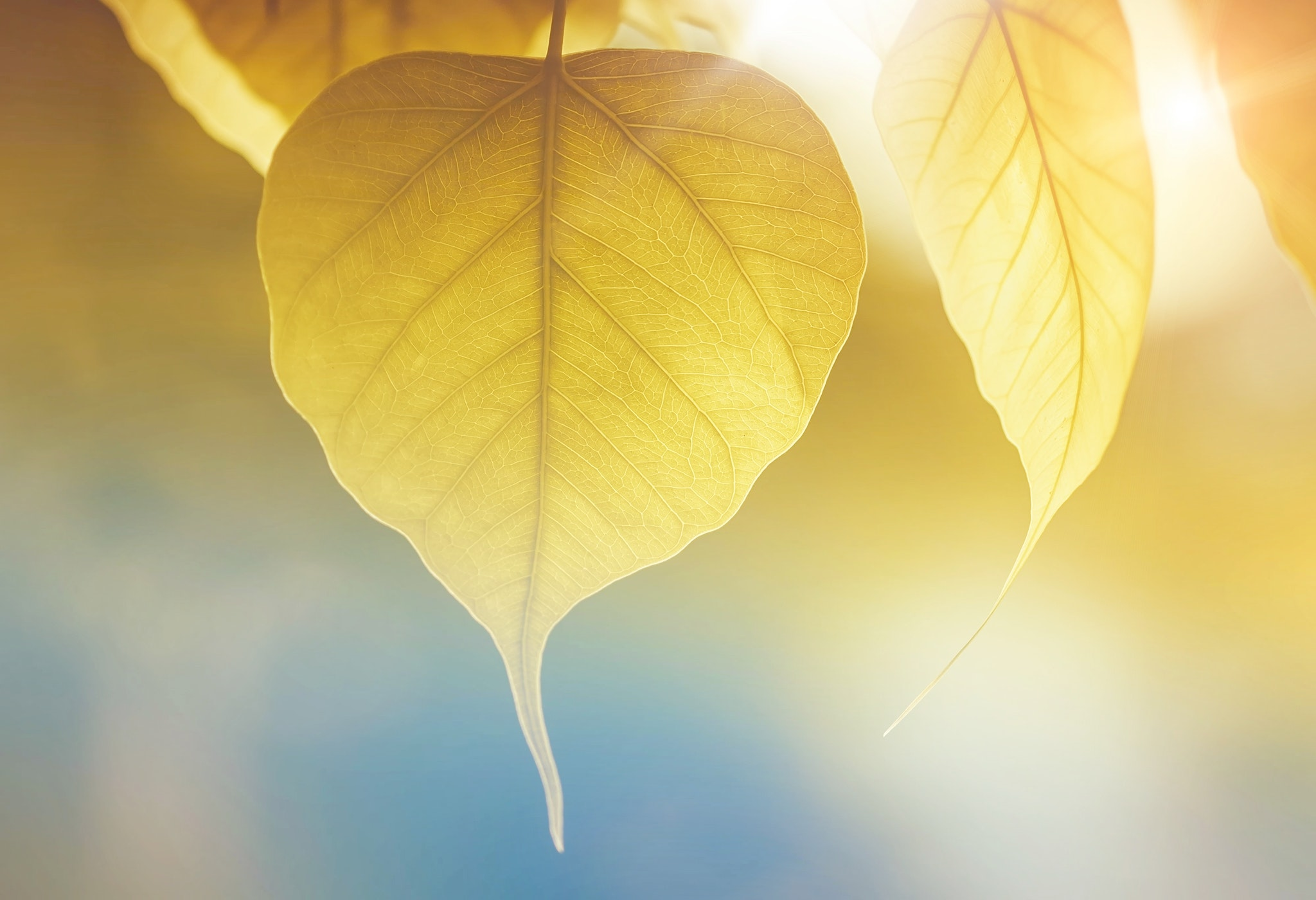 Yellow Leaf, Abstract, Growth, Tree, Sunlight, HQ Photo