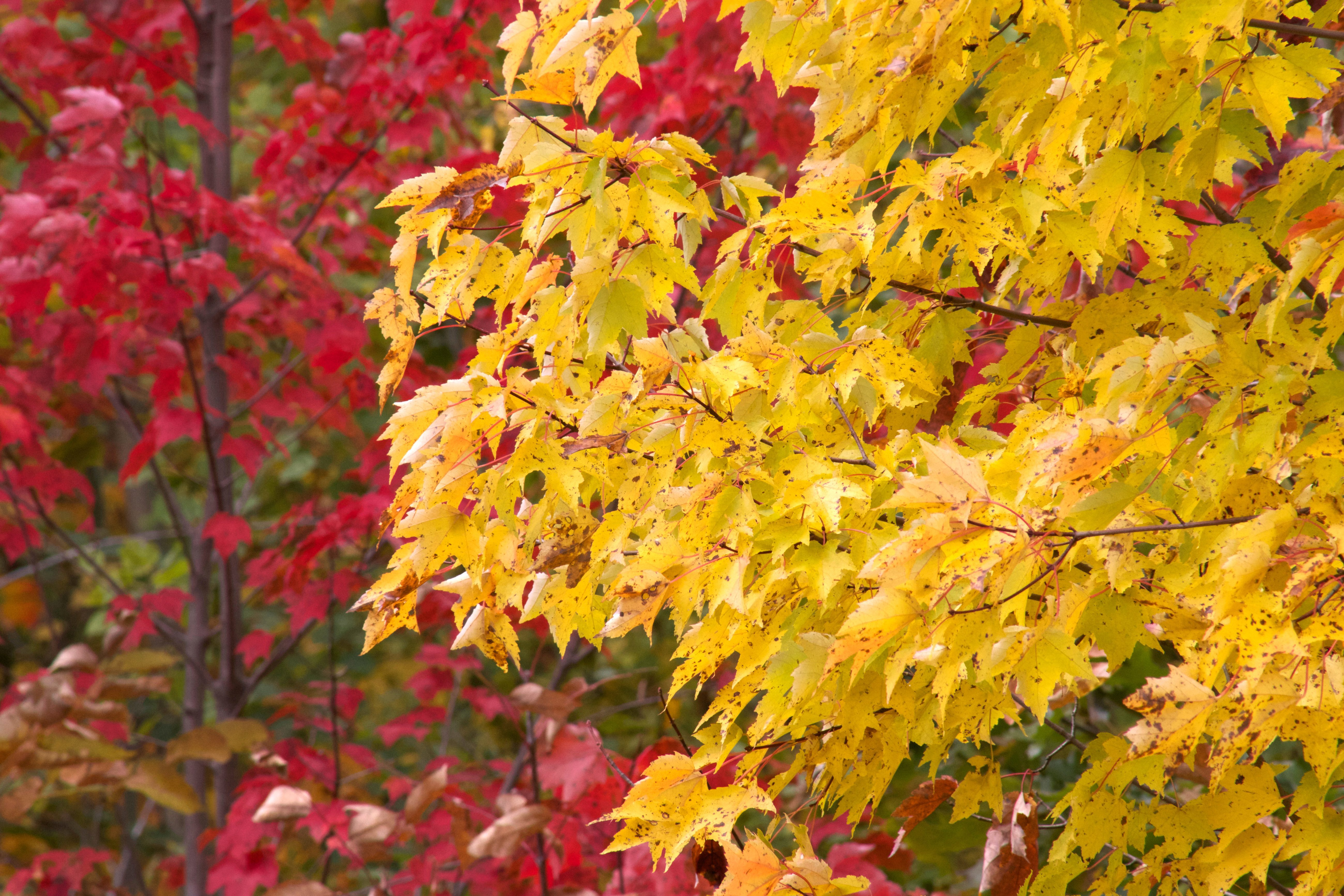 Yellow leaf trees photo