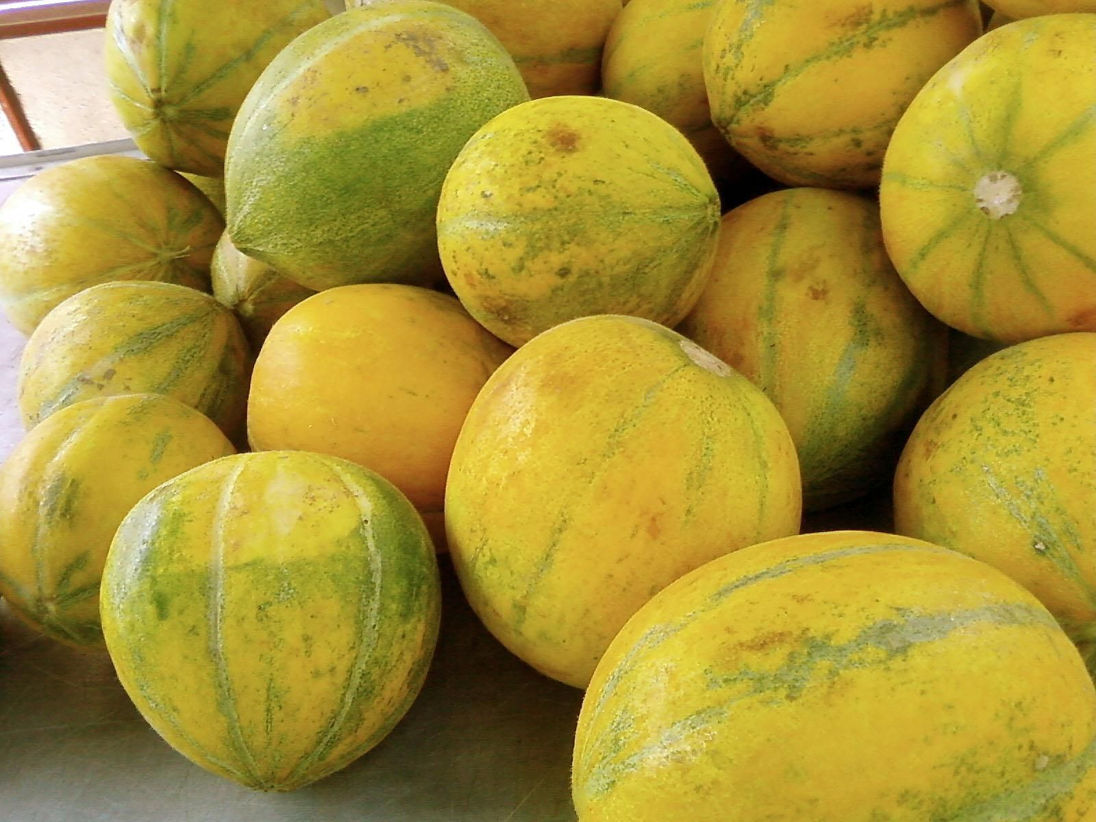 Yellow melons photo