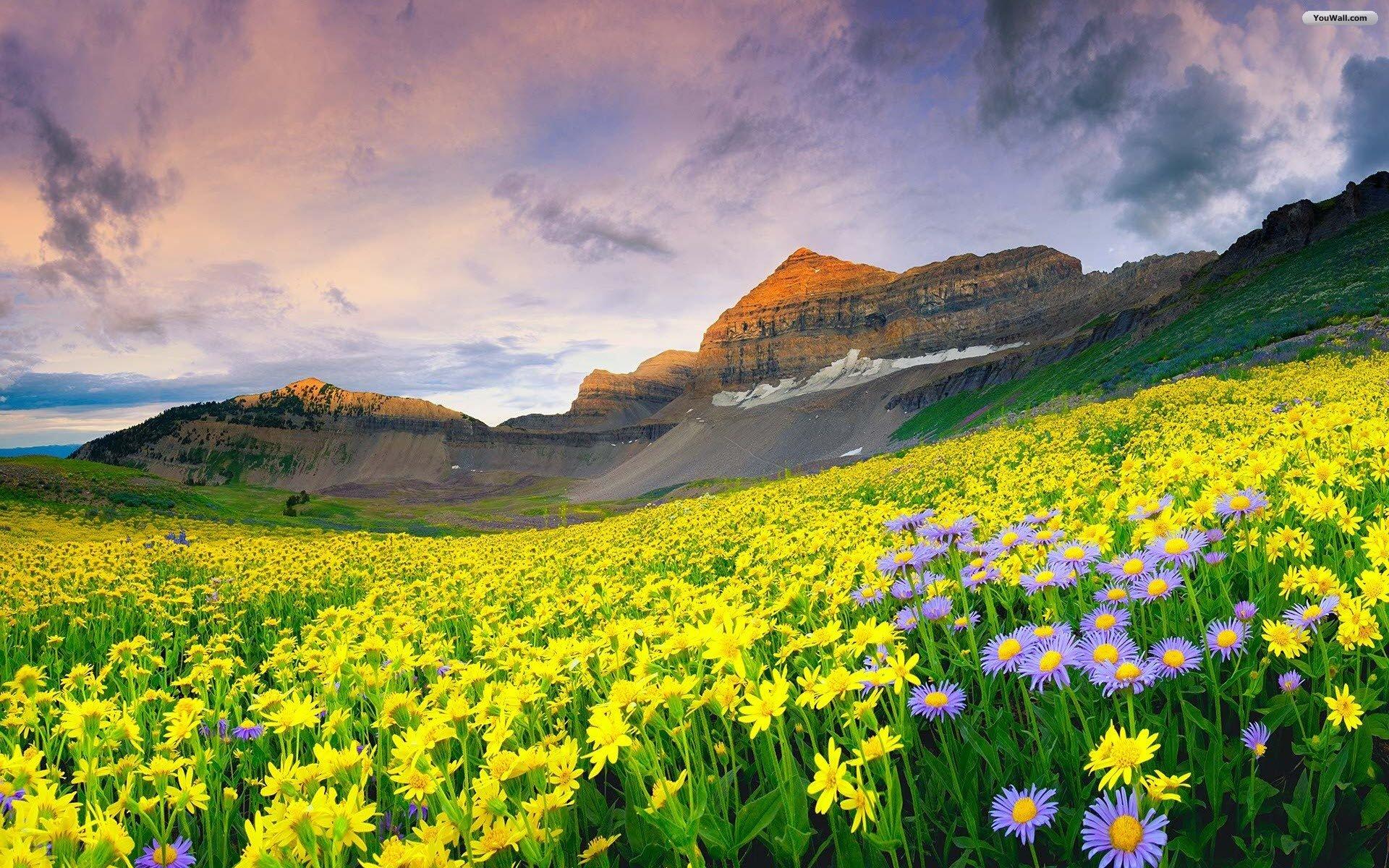 Yellow mountain flower skyrim location the best mountain of 2018 mountain flower replacer at skyrim nexus mods and community mightylinksfo