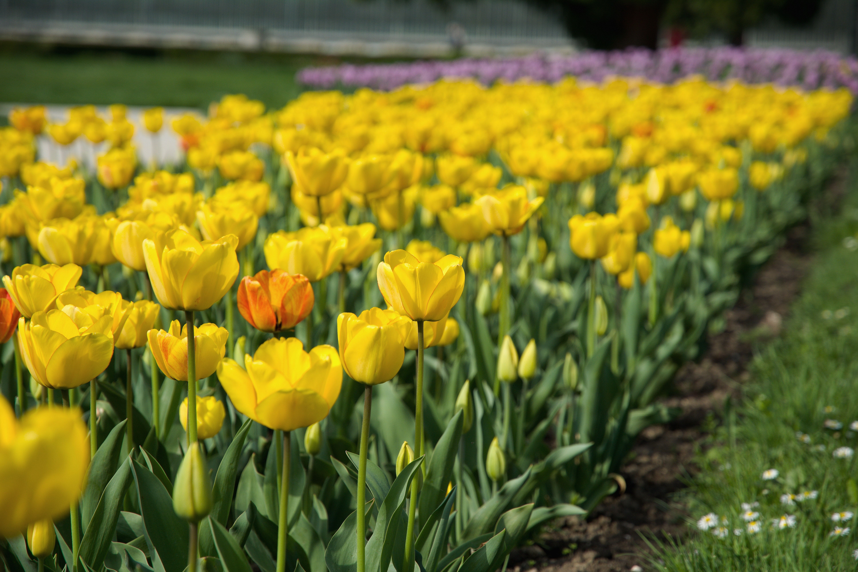 Yellow petal flower field near green grass field photo