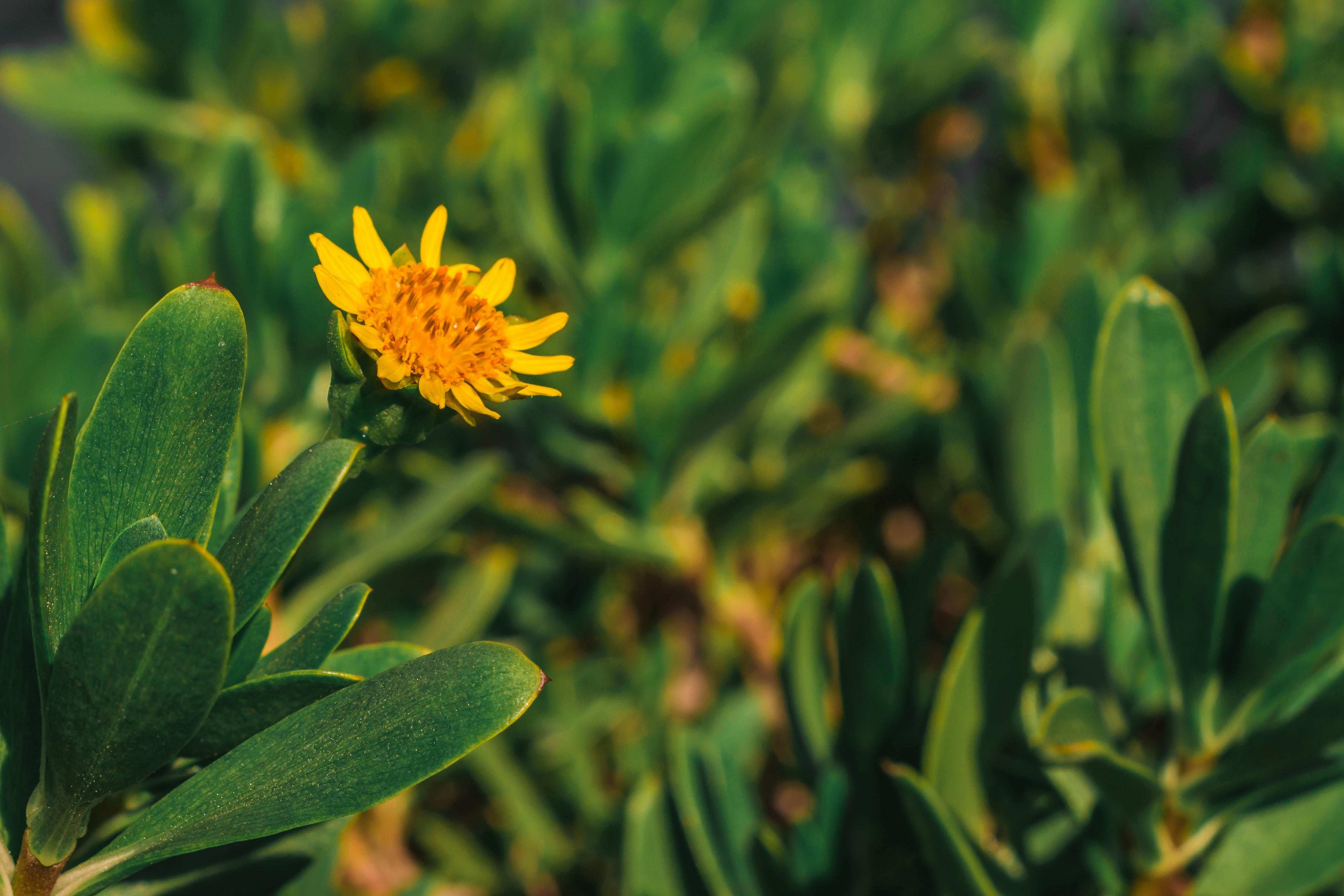 Yellow petaled flower photo