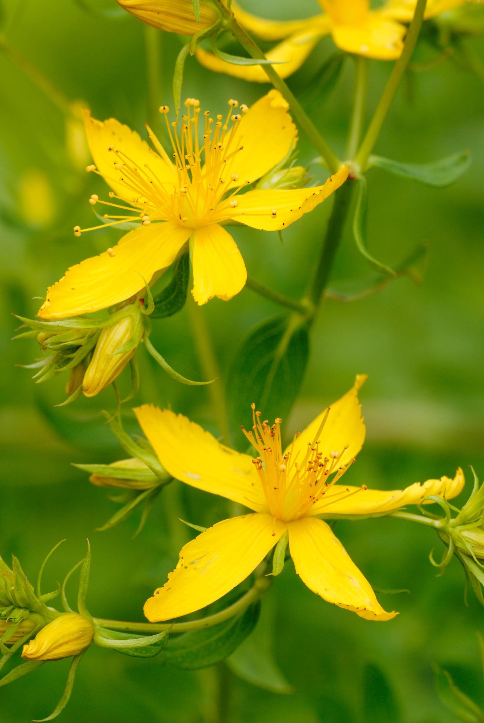 Yellow Petal Flowers Images - Flower Decoration Ideas