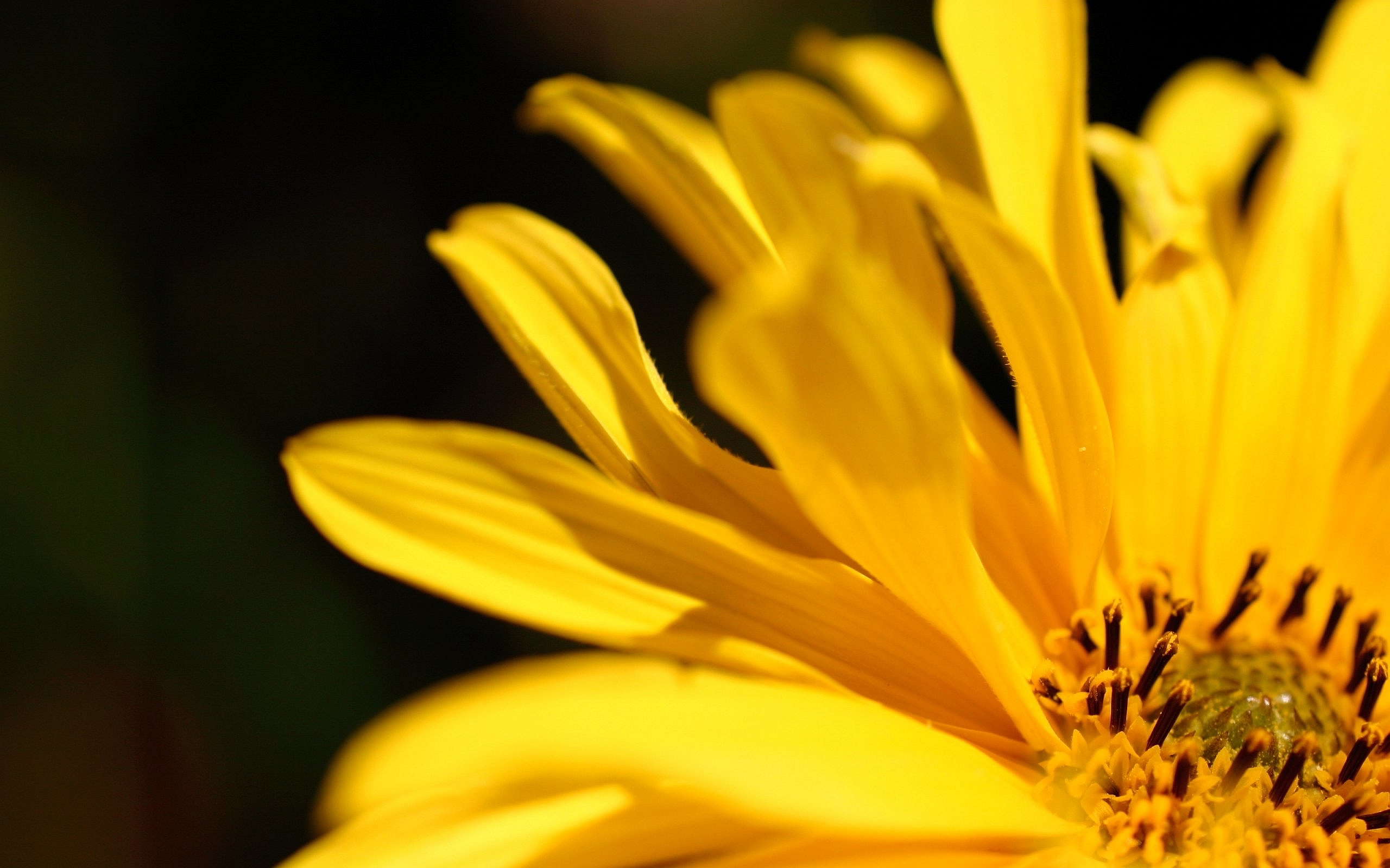 39 Romantic Ideas Using Flower Petals