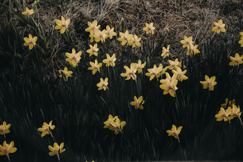 Yellow petaled flowers photo