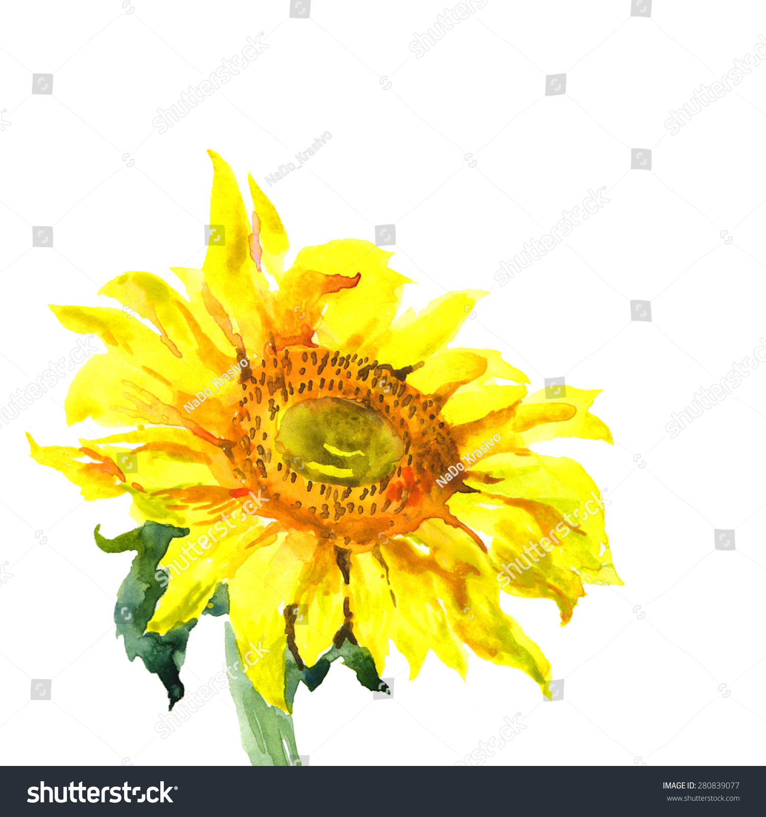 Yellow sunflower illustration photo