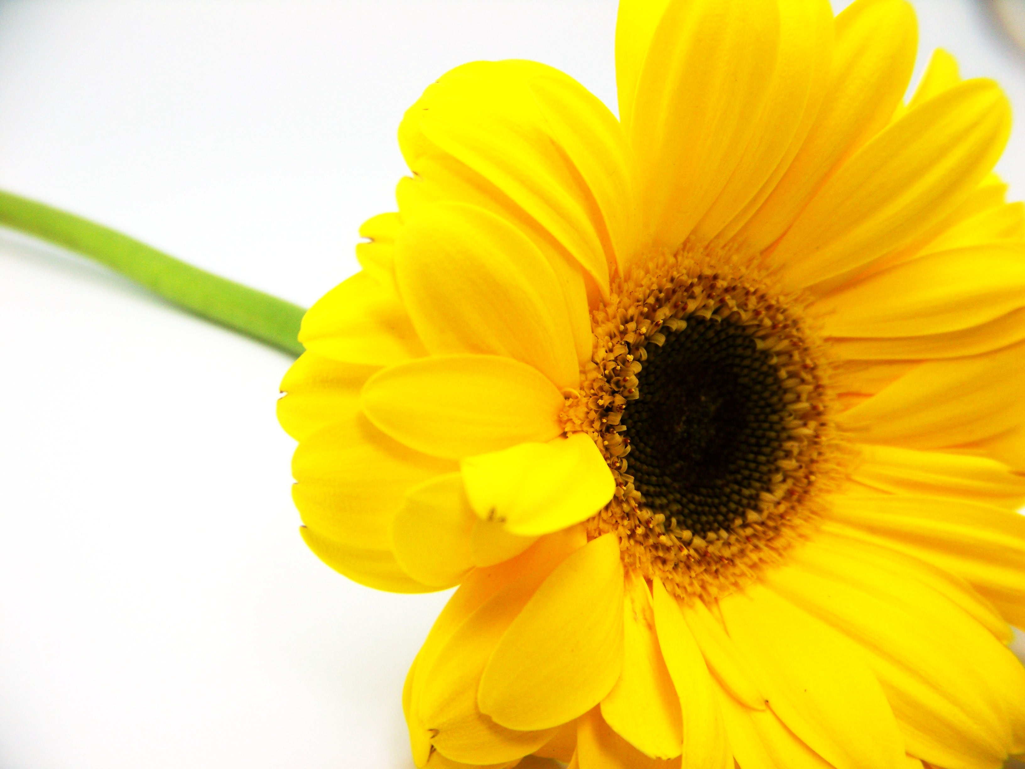Yellow sunflower, Agriculture, Season, Natural, Nature, HQ Photo