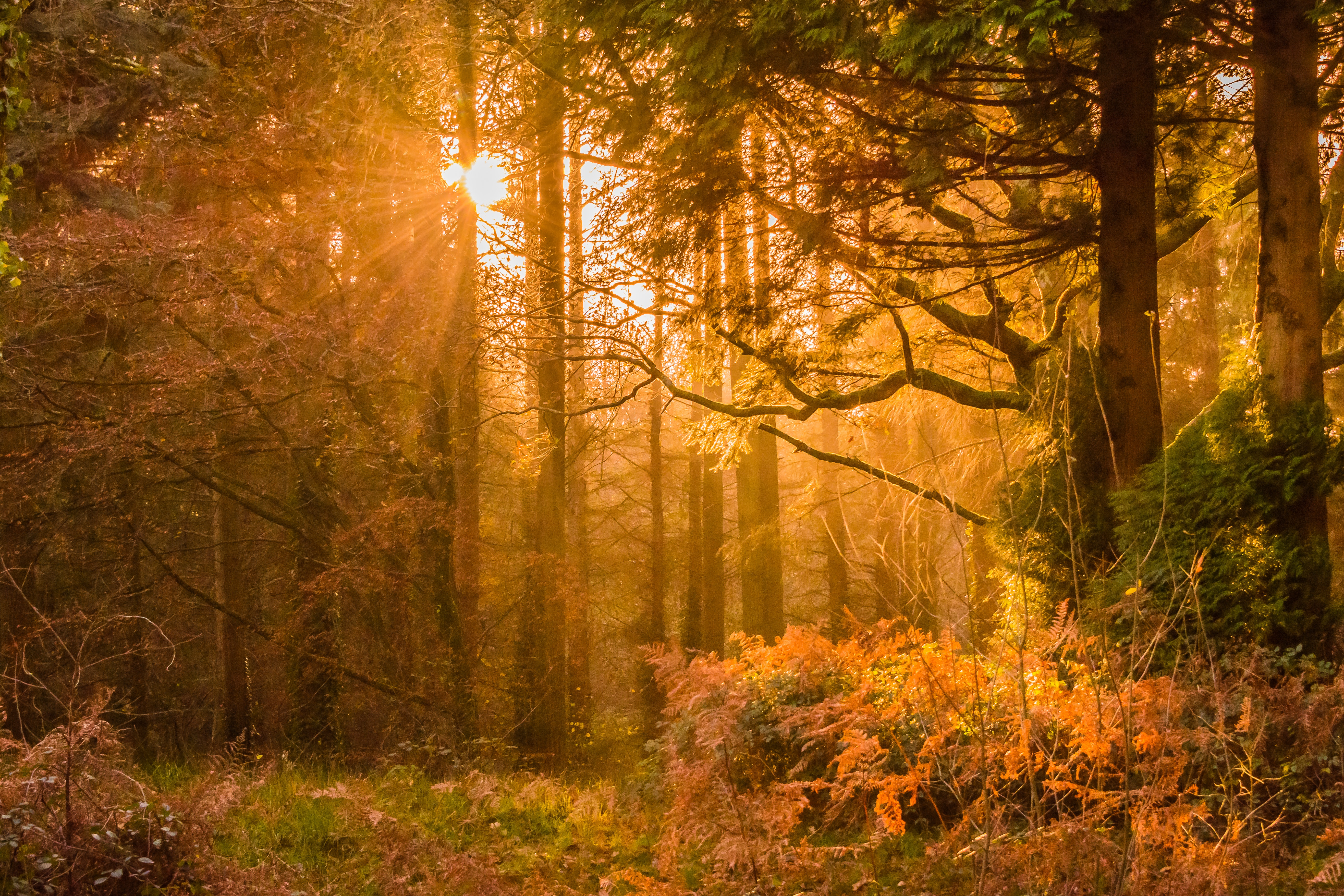 Yellow Sunset Rays Passing Through the Trees, Autumn, Outdoors, Weather, Trees, HQ Photo