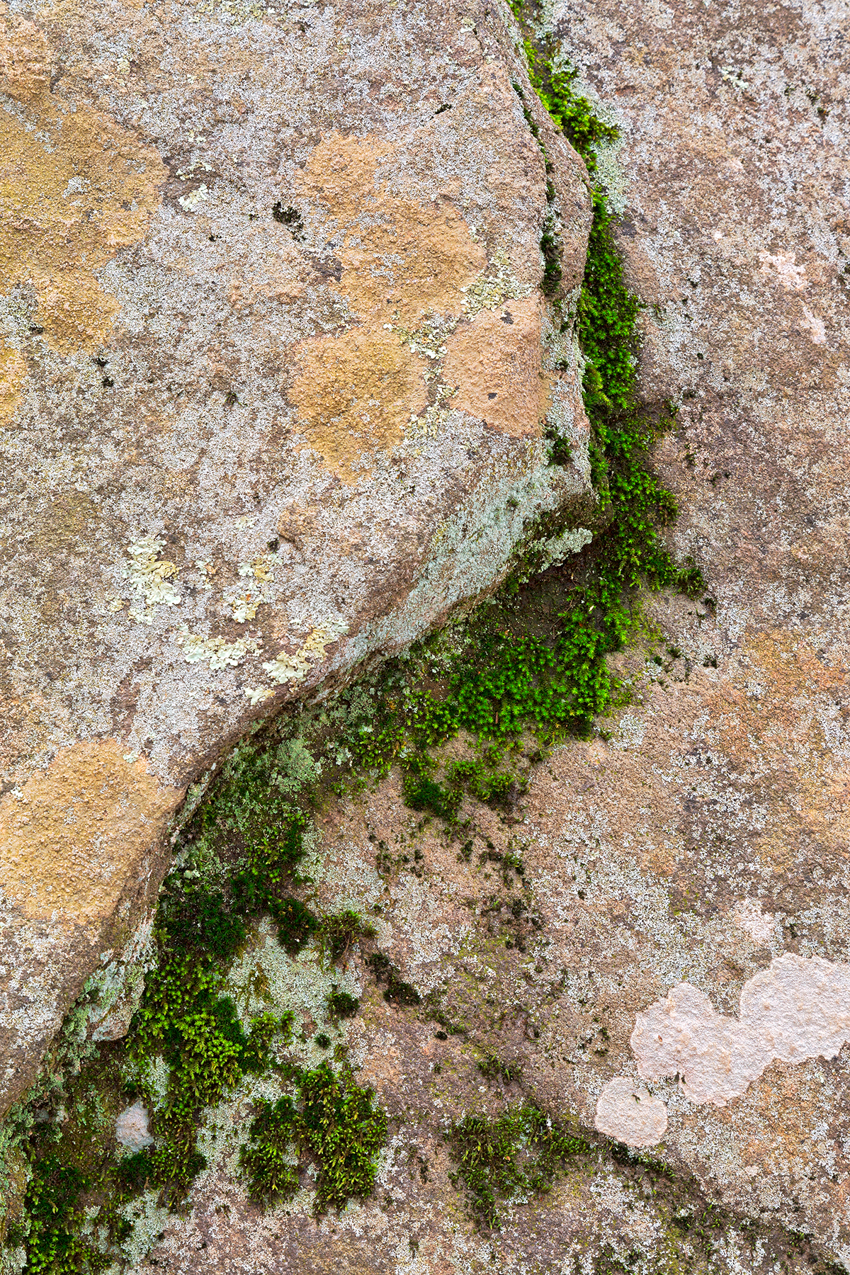 Yin yang moss stone - hdr photo