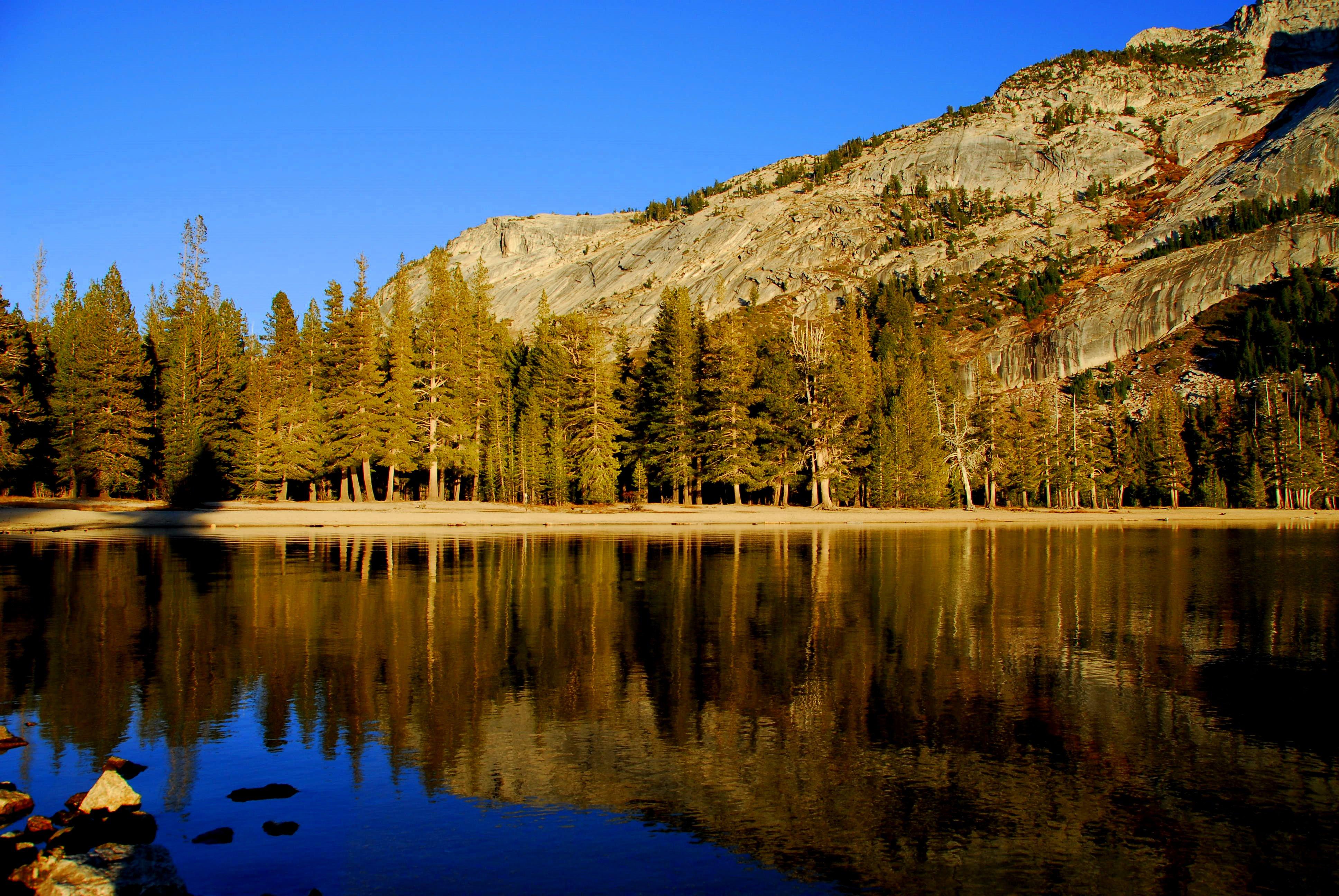 Yosemite National Park, Beauty, Pond, Woods, Water, HQ Photo