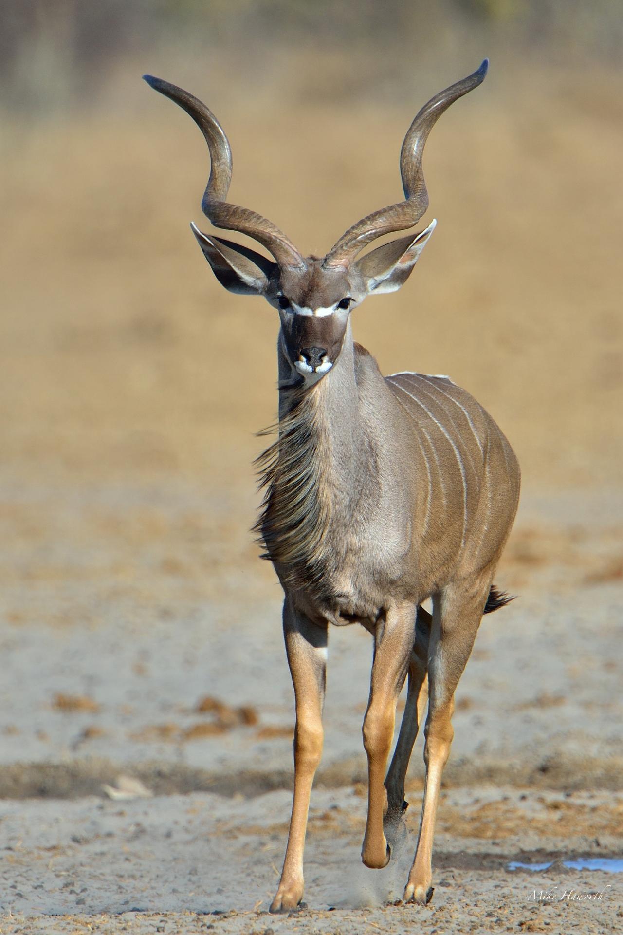 Etosha-0712 591 | Howie's Wildlife Images