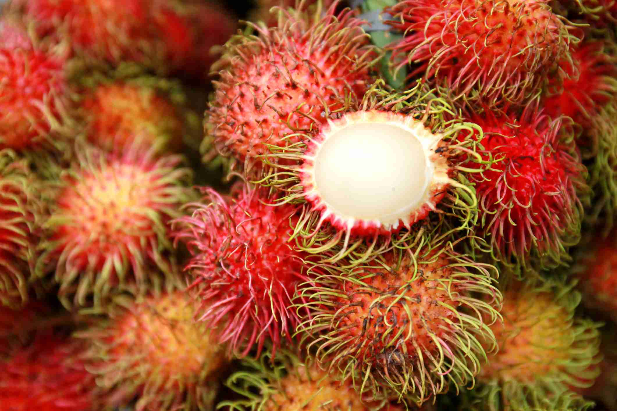 Free photo: Young Rambutan Fruit - Fruit, Green, Plant ...