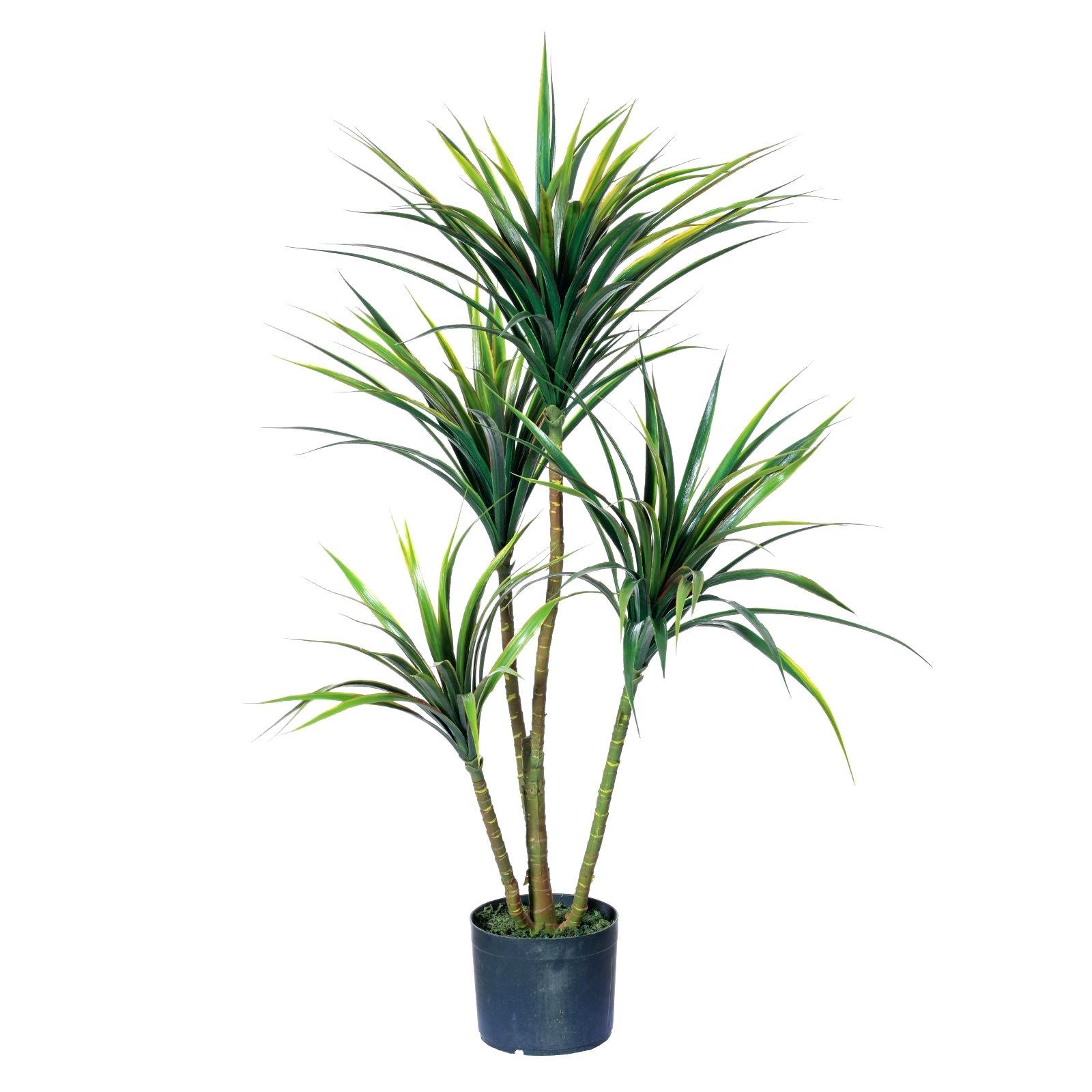 Yukka Plant Yucca Care Instructions Yucca Plant Root Damage ...