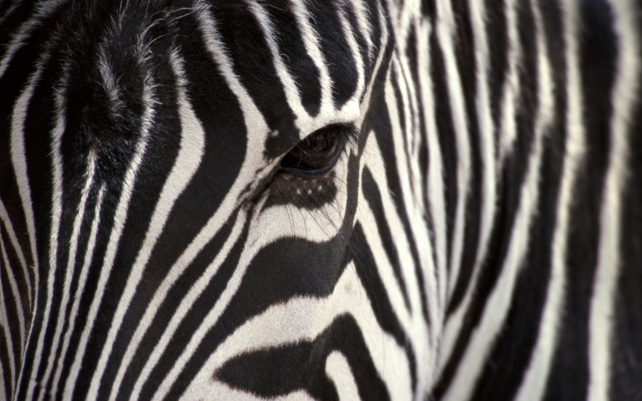 Animals: Zebras Close Up Animals Sweet Animal Pictures With Captions ...