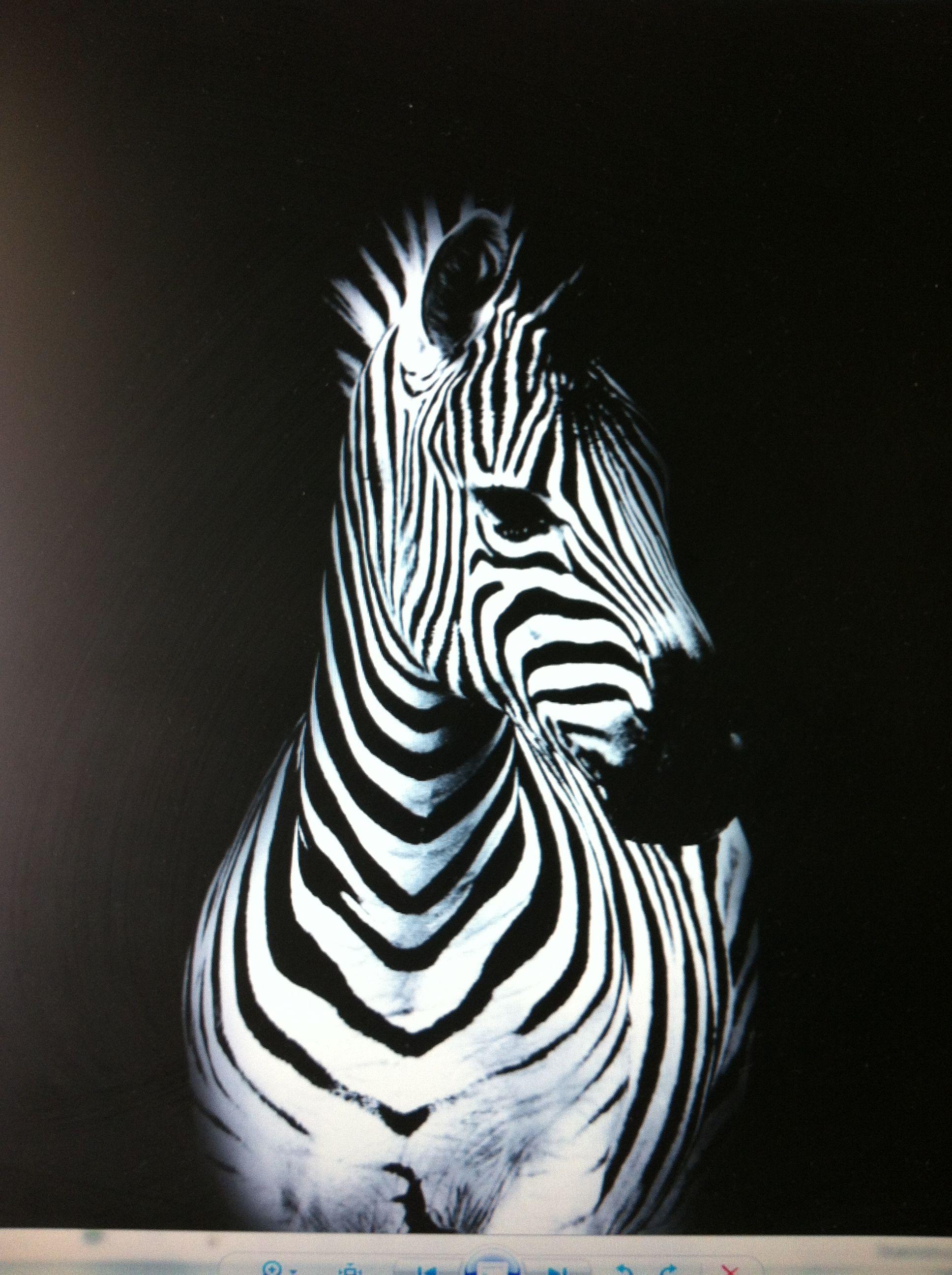Acrylic Zebra Painting … | Pinteres…