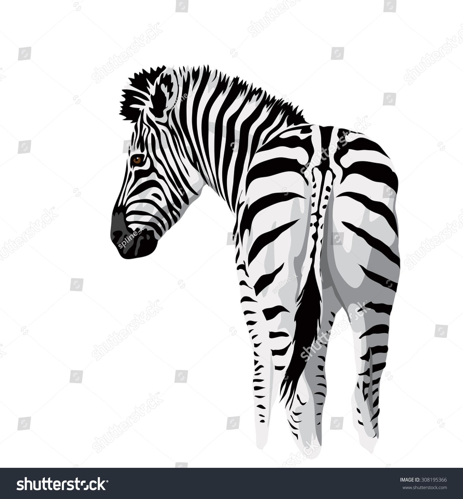 Body Zebra Tail Stock Illustration 308195366 - Shutterstock
