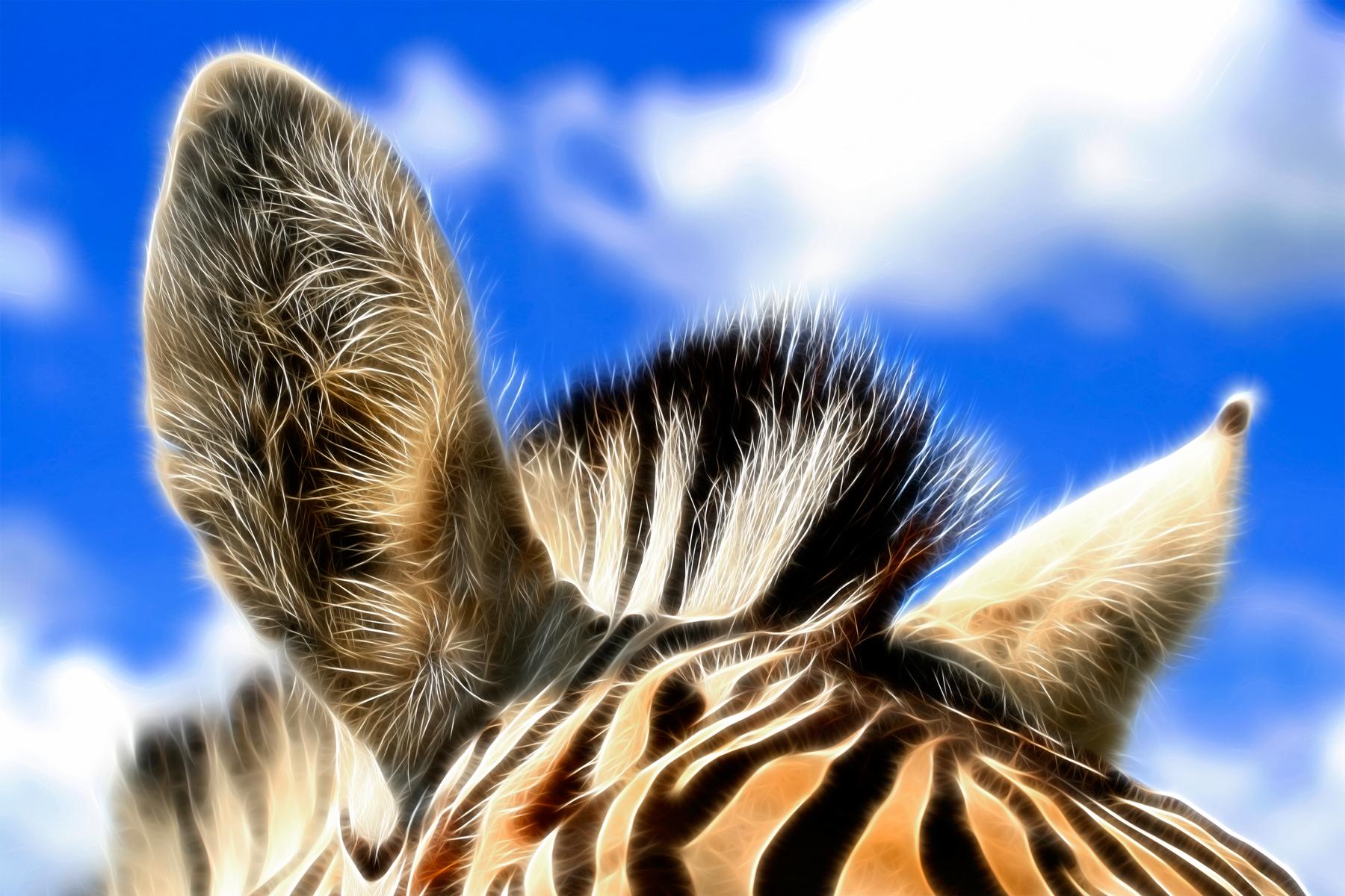 Zebra Ears Abstract, Abstract, Ruminant, Maroon, Natural, HQ Photo