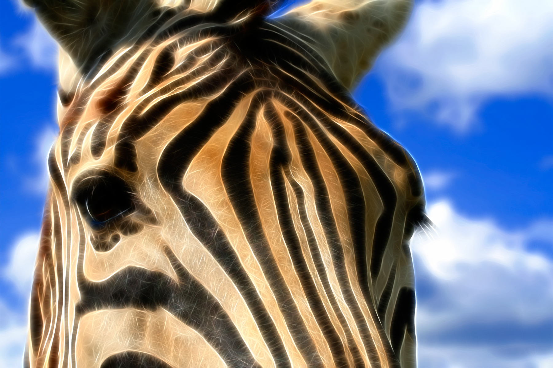 Zebra profile abstract photo