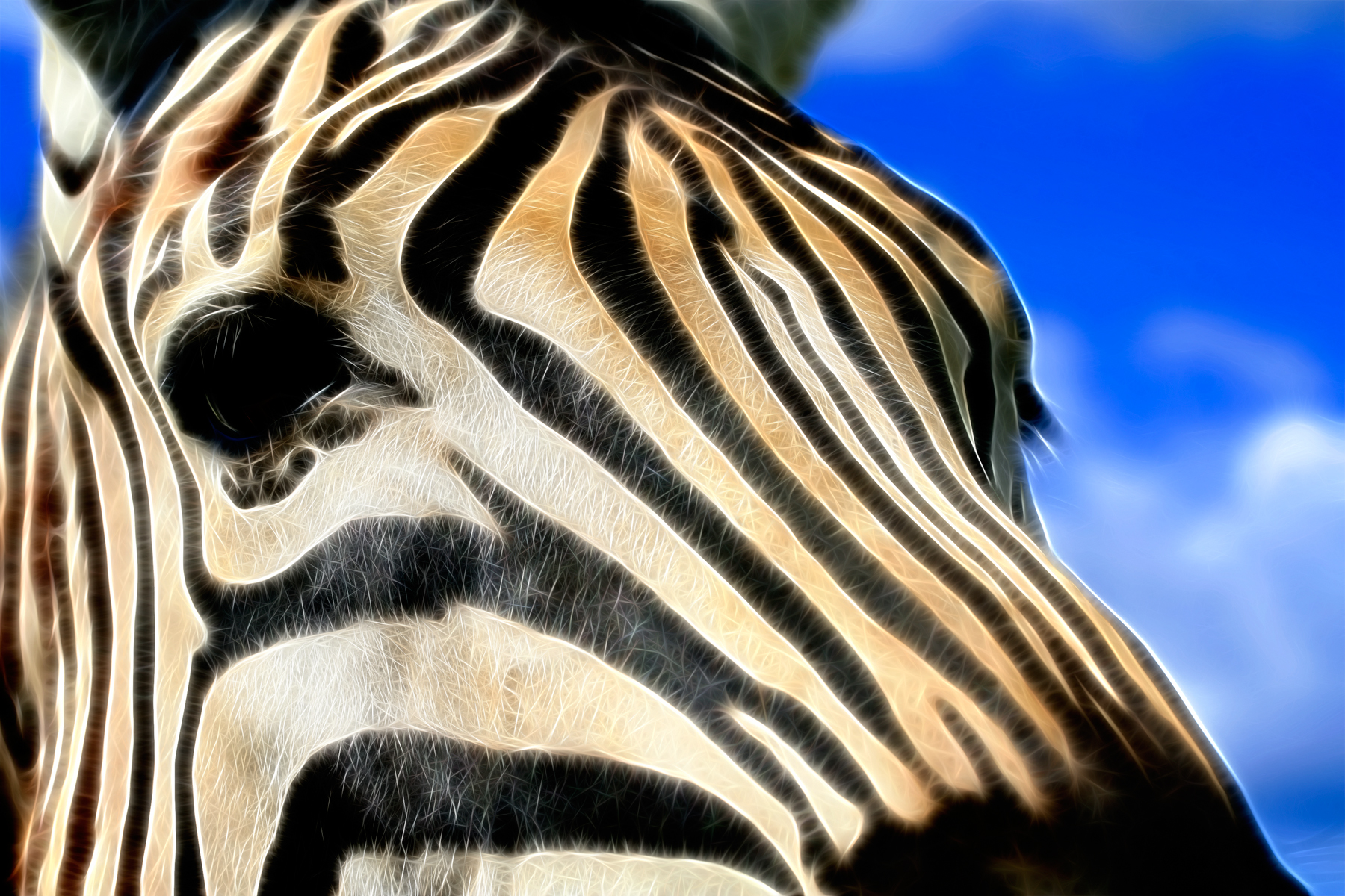 Zebra Profile Abstract, Abstract, Somadjinn, Manipulation, Natural, HQ Photo