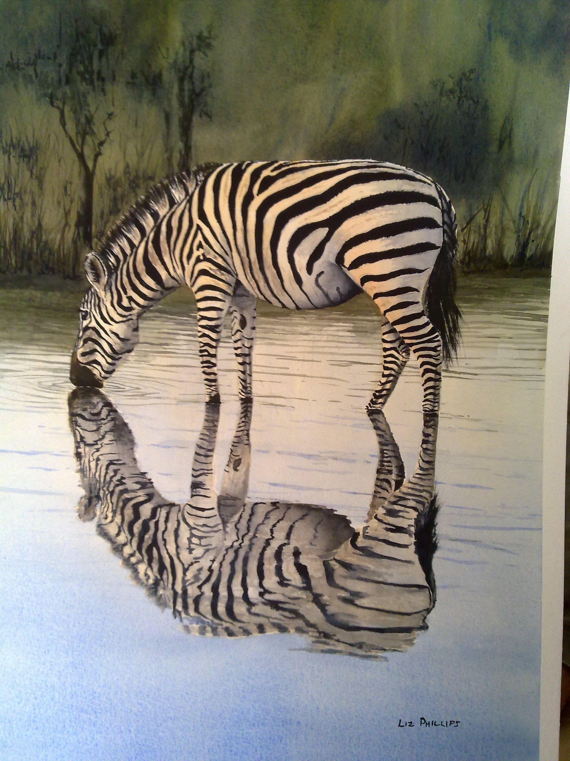 Zebra reflection photo