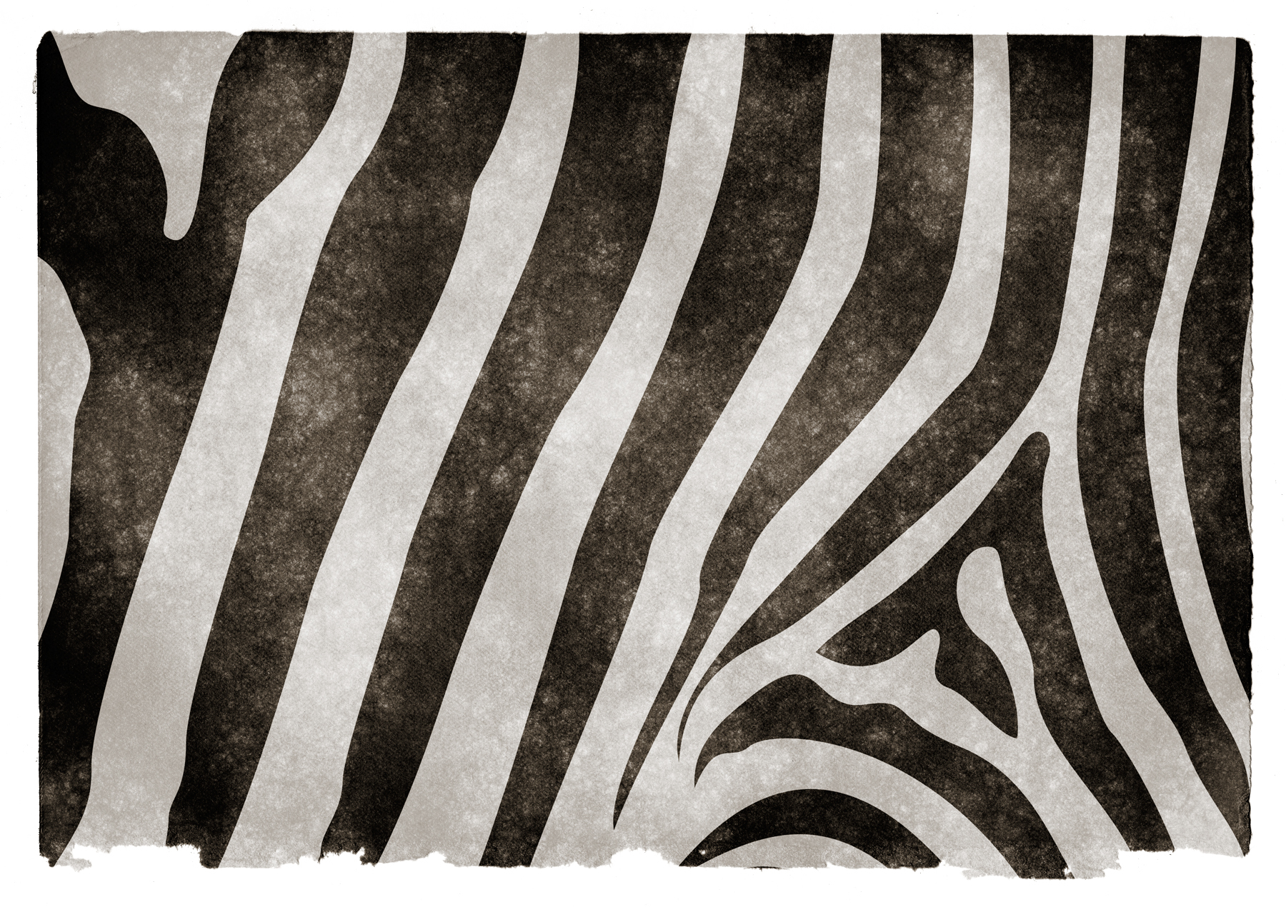 Zebra stripes grunge paper photo