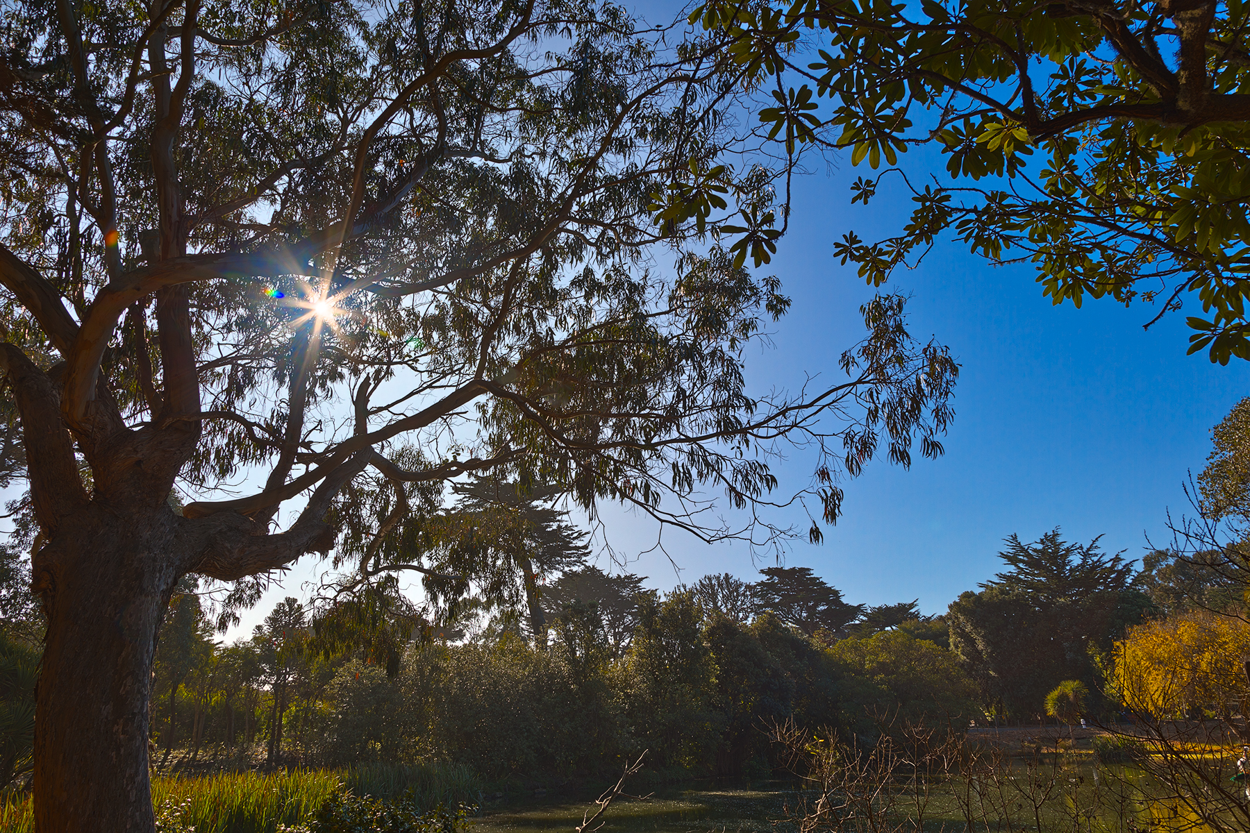 Zoo foliage & sunlight - hdr photo