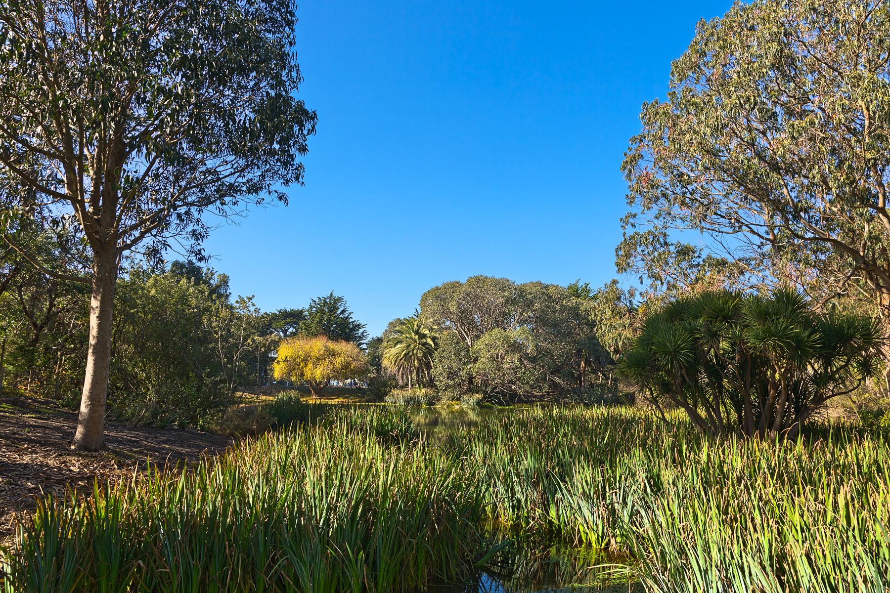 Zoo marsh scenery - hdr photo