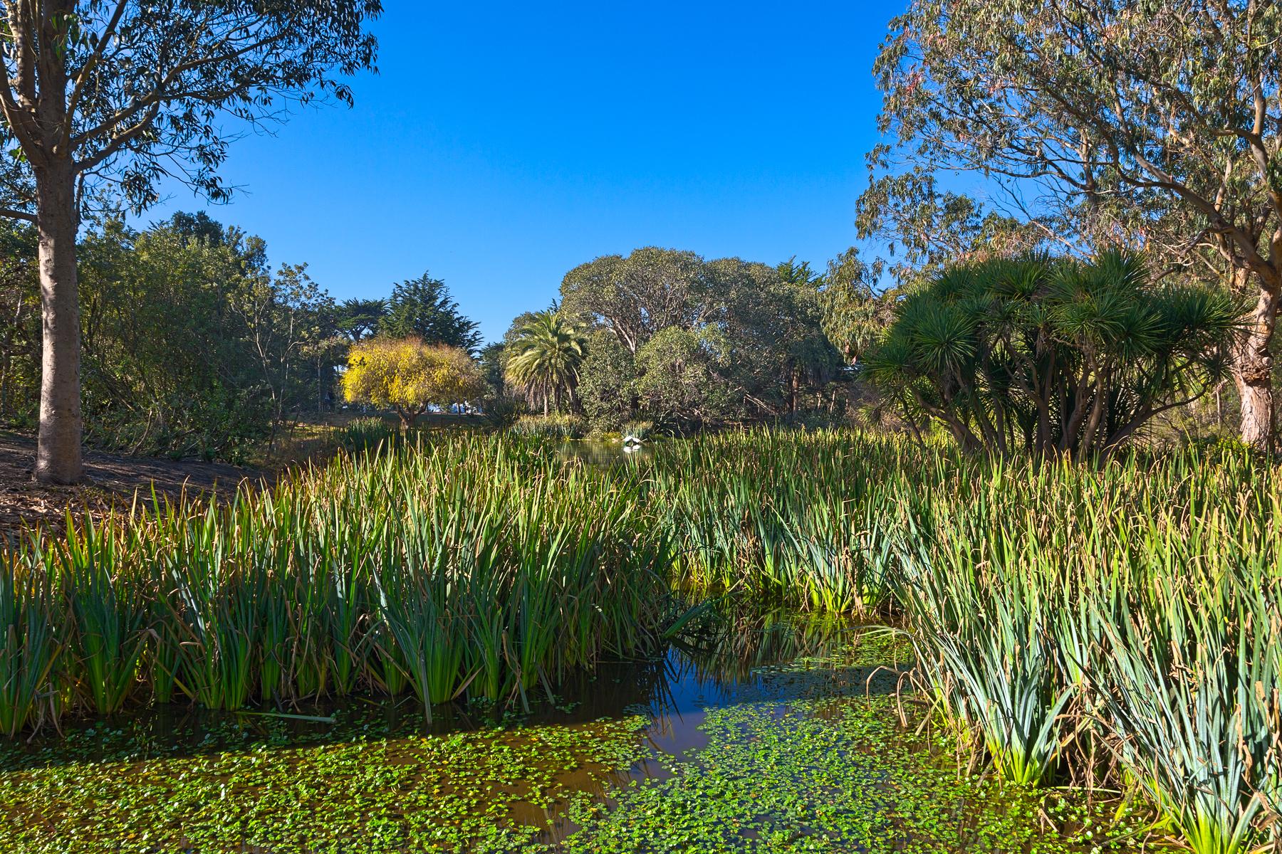 Zoo Marsh Scenery - HDR, America, Serene, Tourism, Swamp, HQ Photo