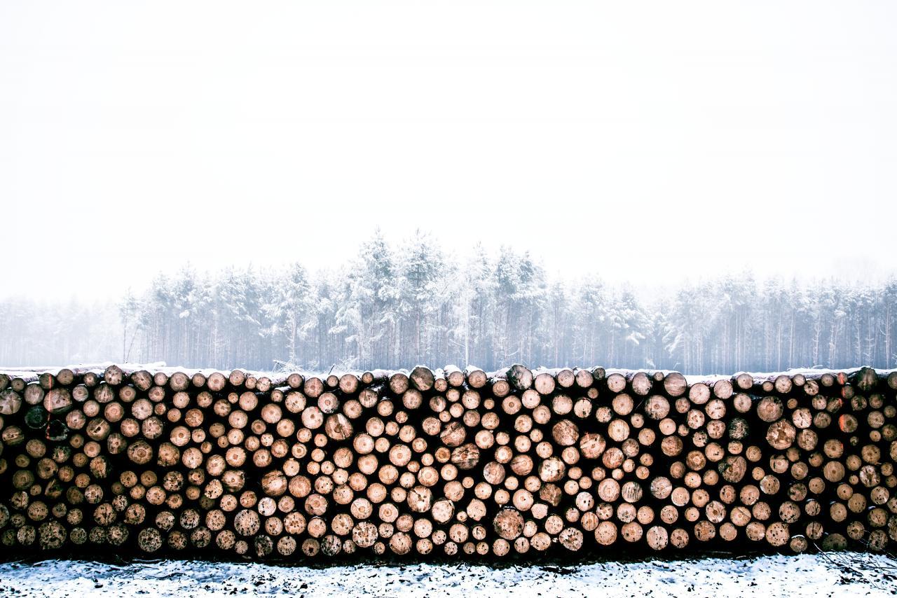 Cutting Jungles, woods, work, wood, log, HQ Photo