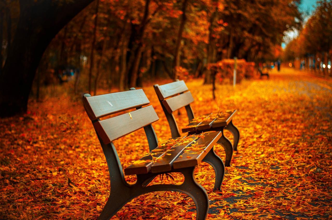 Fallen Leaves, leaf, leave, fallen, fall, HQ Photo