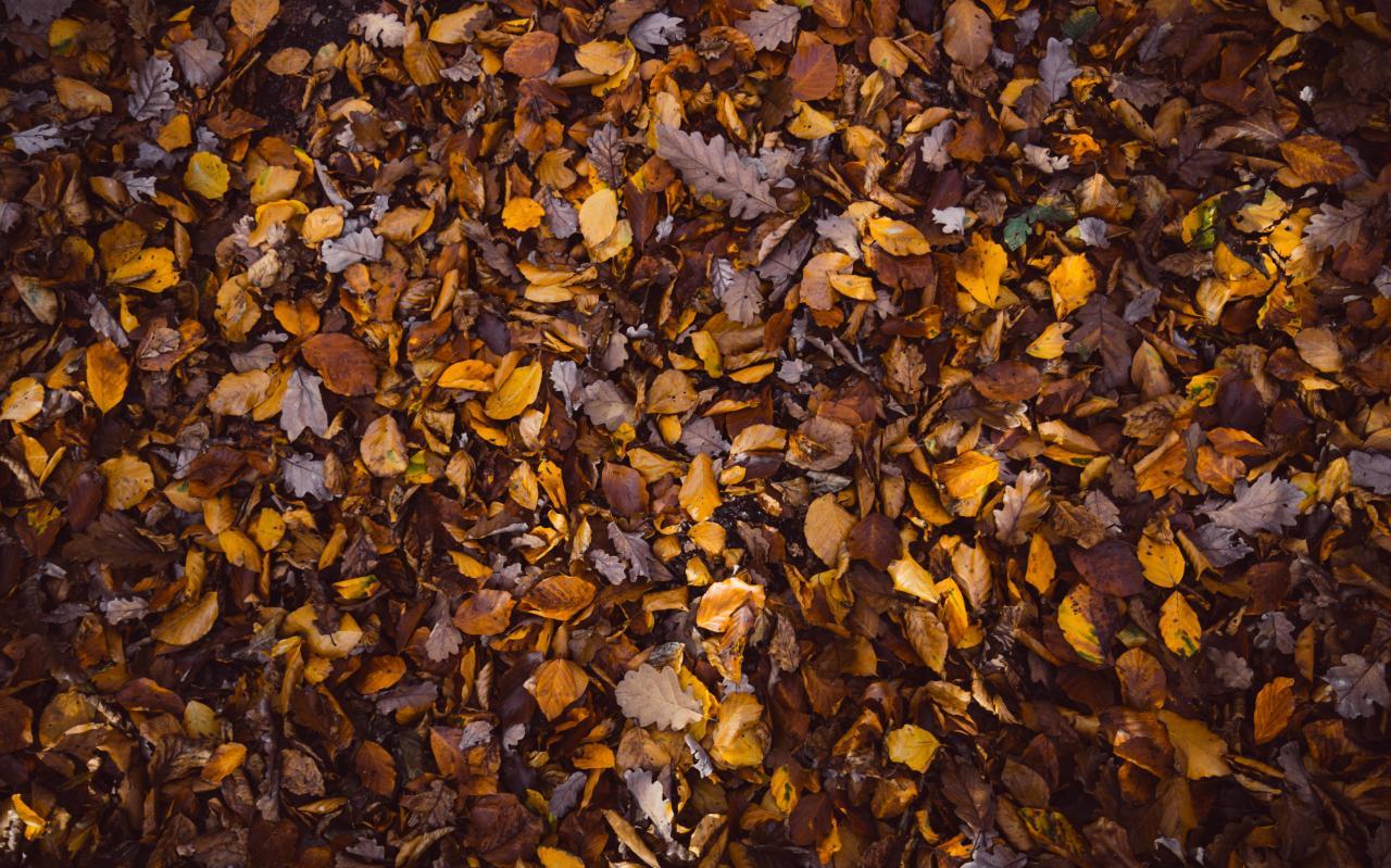 Fallen Leaves, leave, nature, leaf, season, HQ Photo
