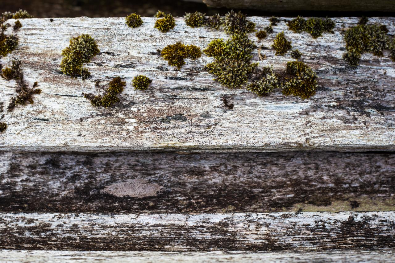 Old Wood with Moss, used, weathered, wood, texture, HQ Photo