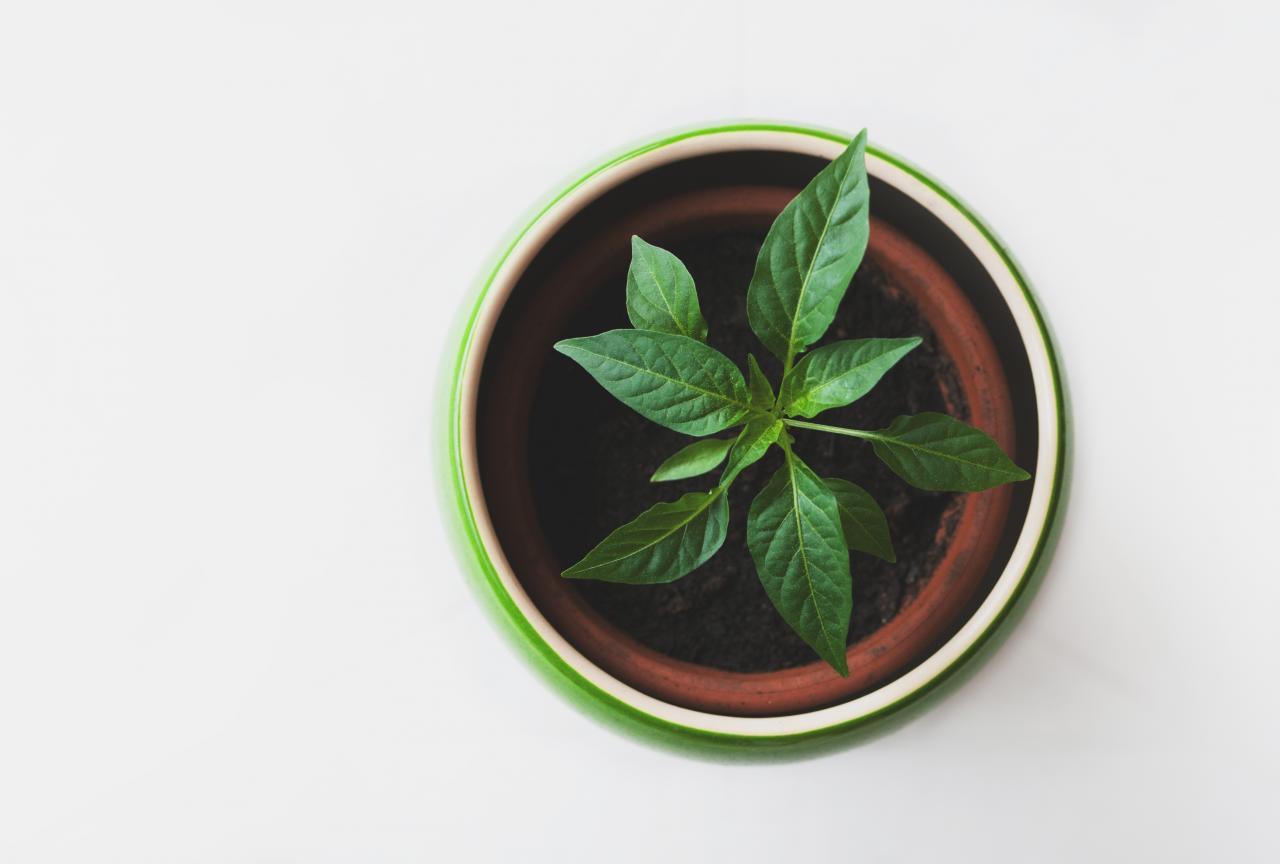 Plant Pot, pot, plant, nature, green, HQ Photo