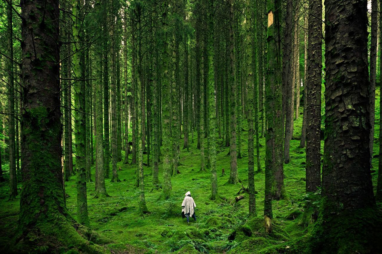 Walk into the Woods, tree, walk, wood, woods, HQ Photo